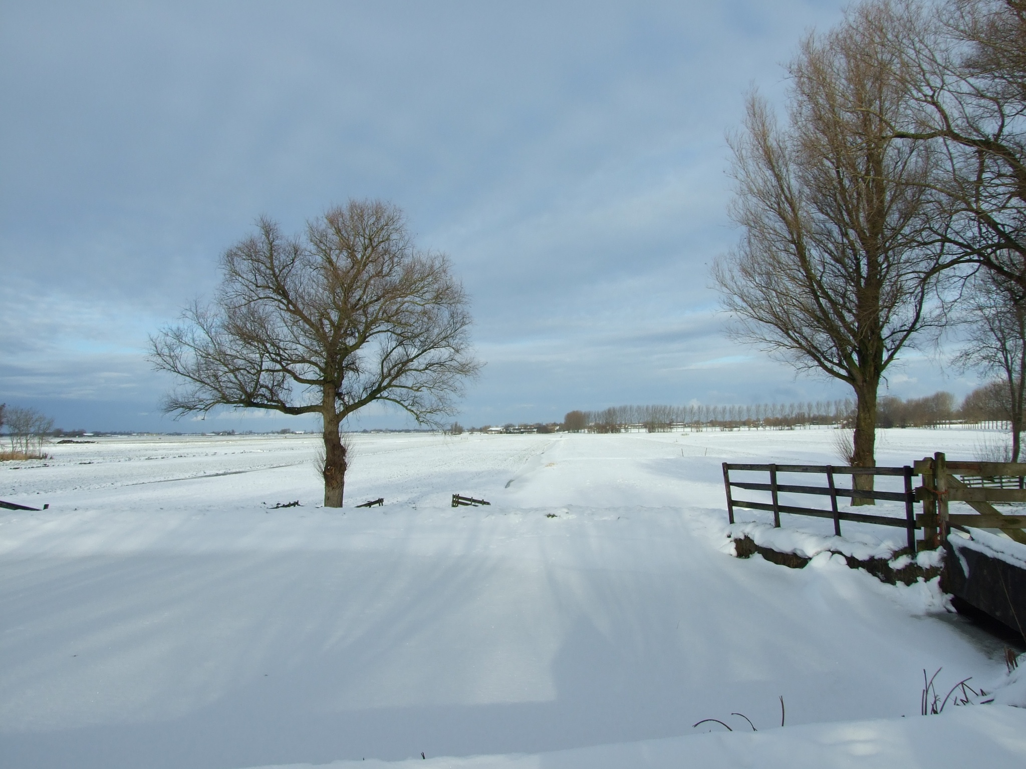 trees in the snow by henkhessel