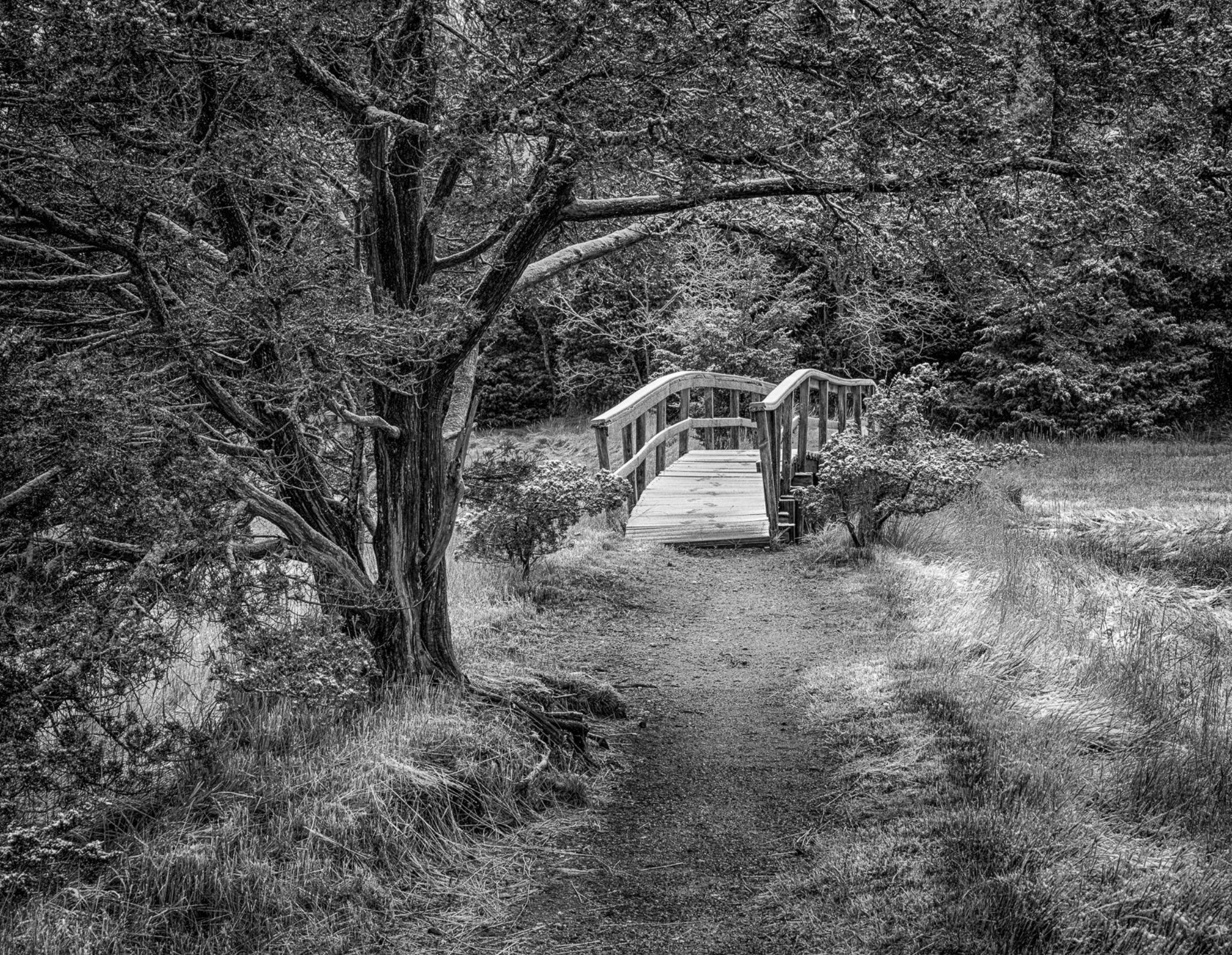 The Bridge by John Klingel