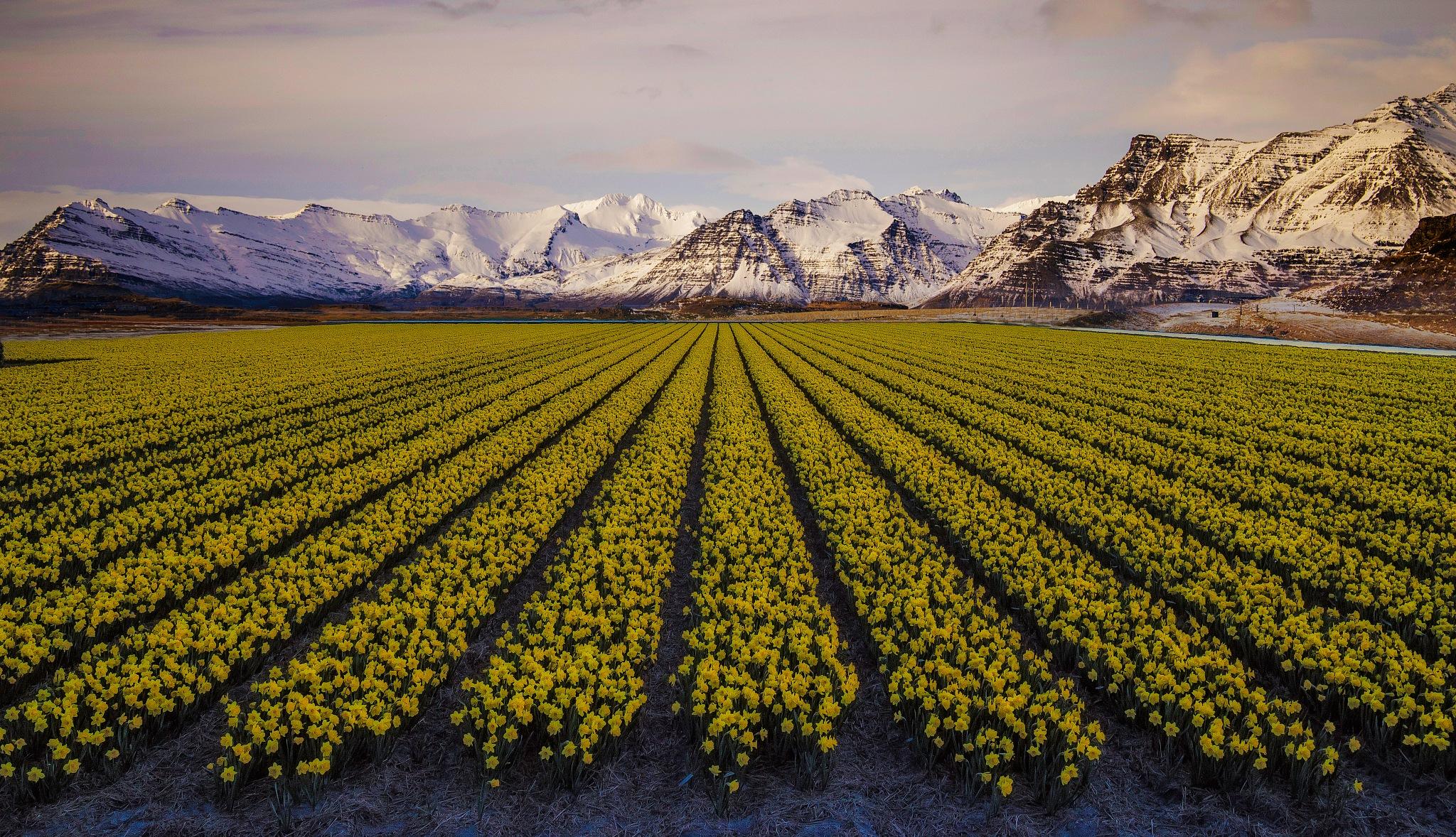 Icelandic Landscape by Arijit Roychoudhury