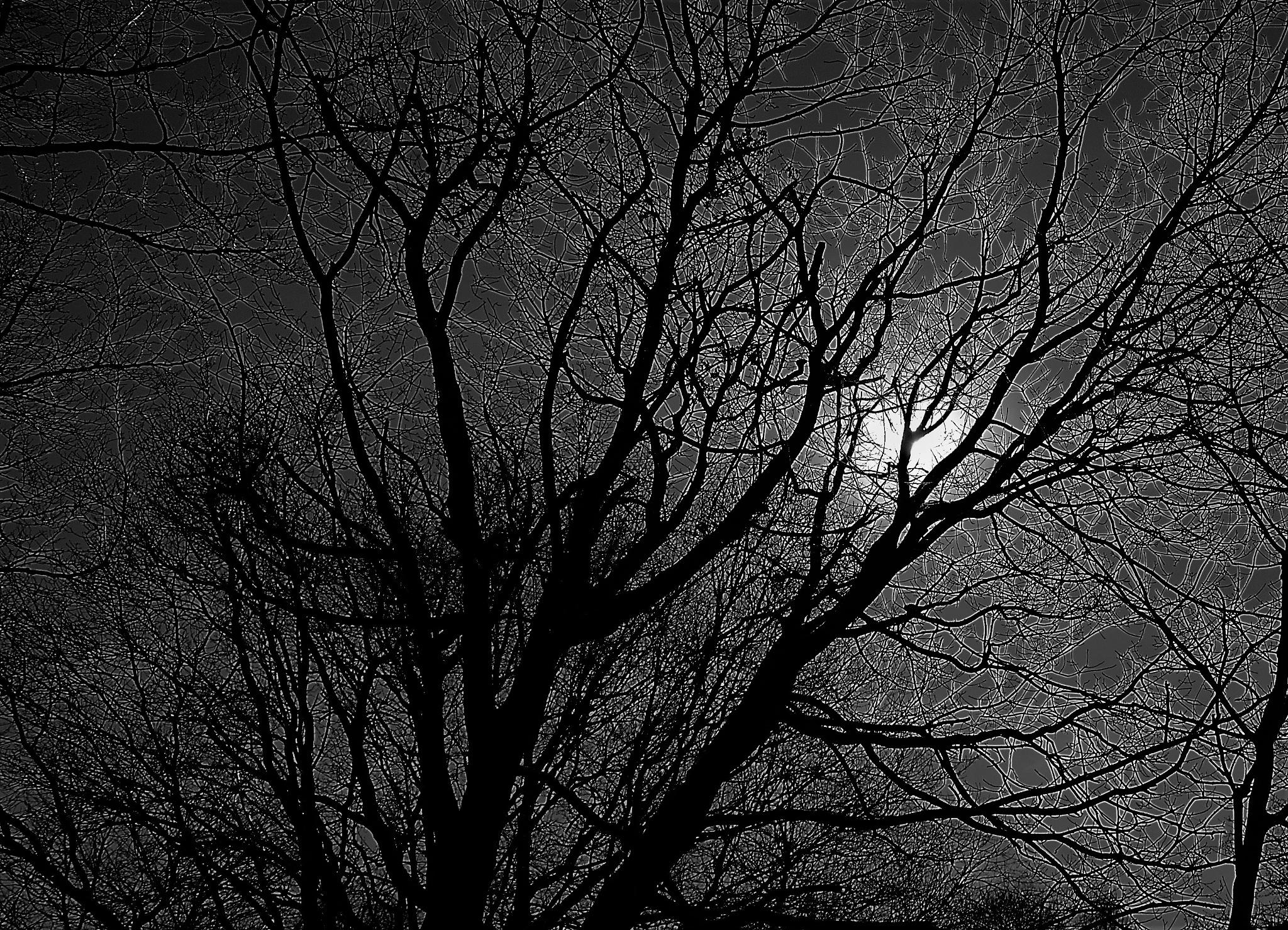 tree by CROCK69
