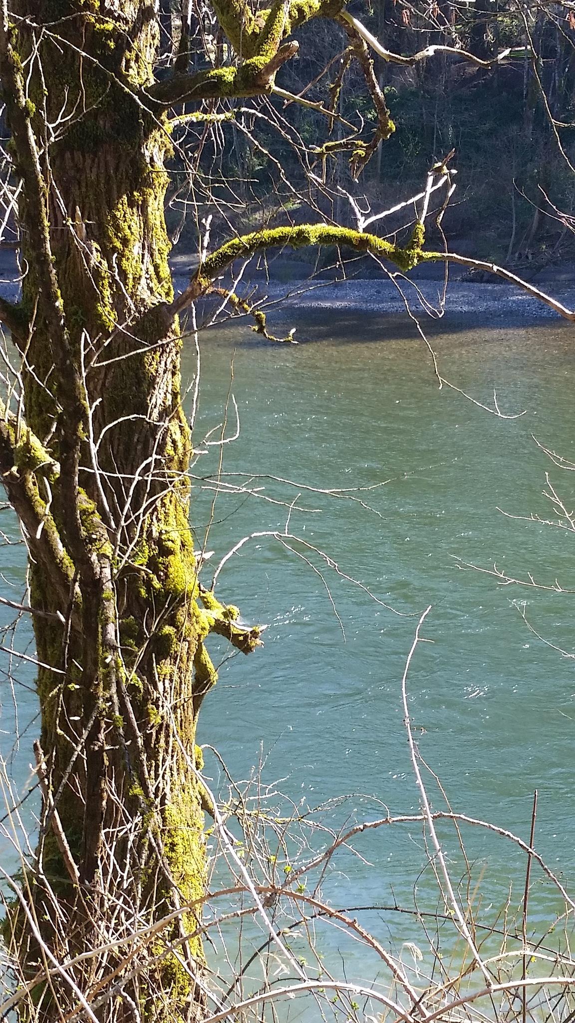 Beautiful Sandy River Oregon by B56