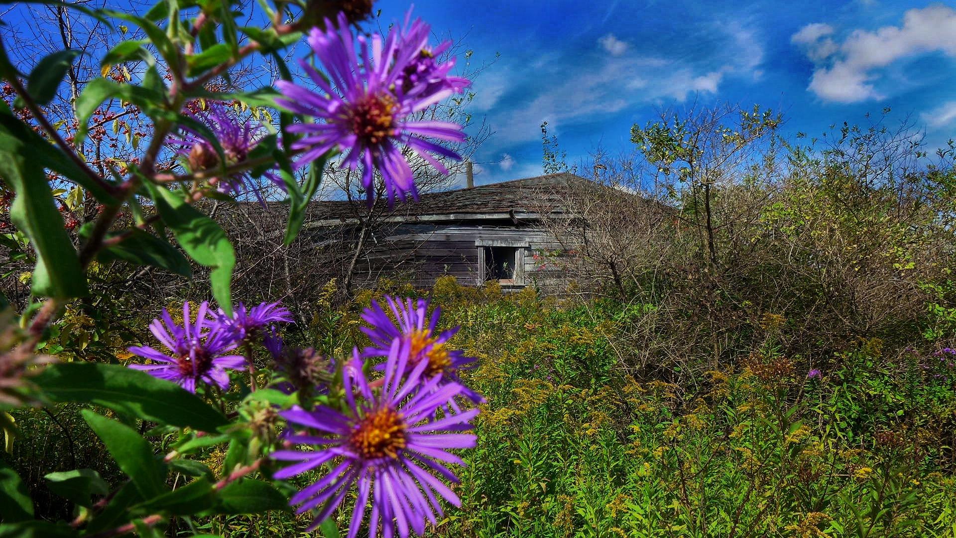 Abandoned Apple Farm by Walter Novak