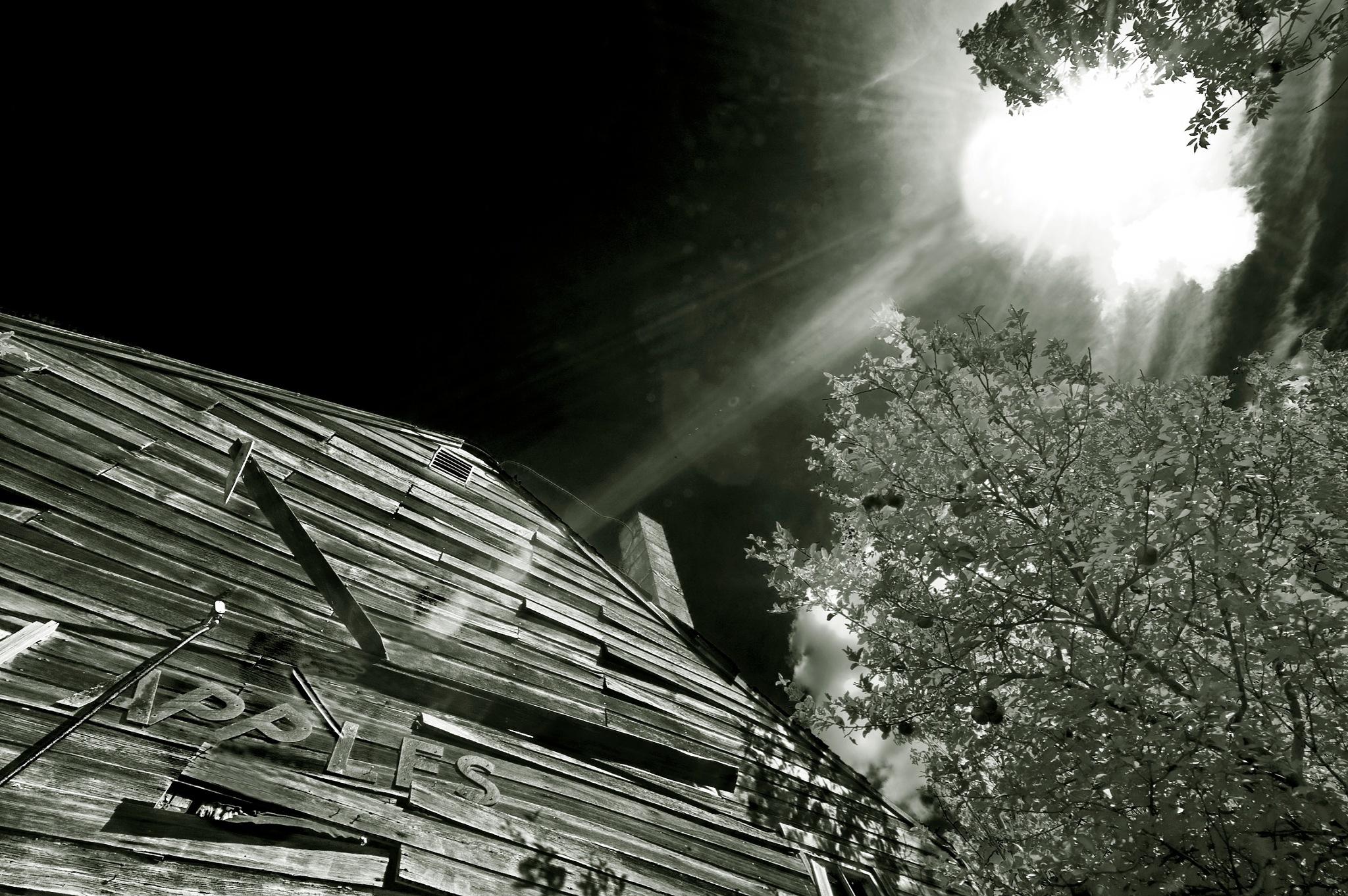 Abandoned Apple Farm- Ohio USA by Walter Novak