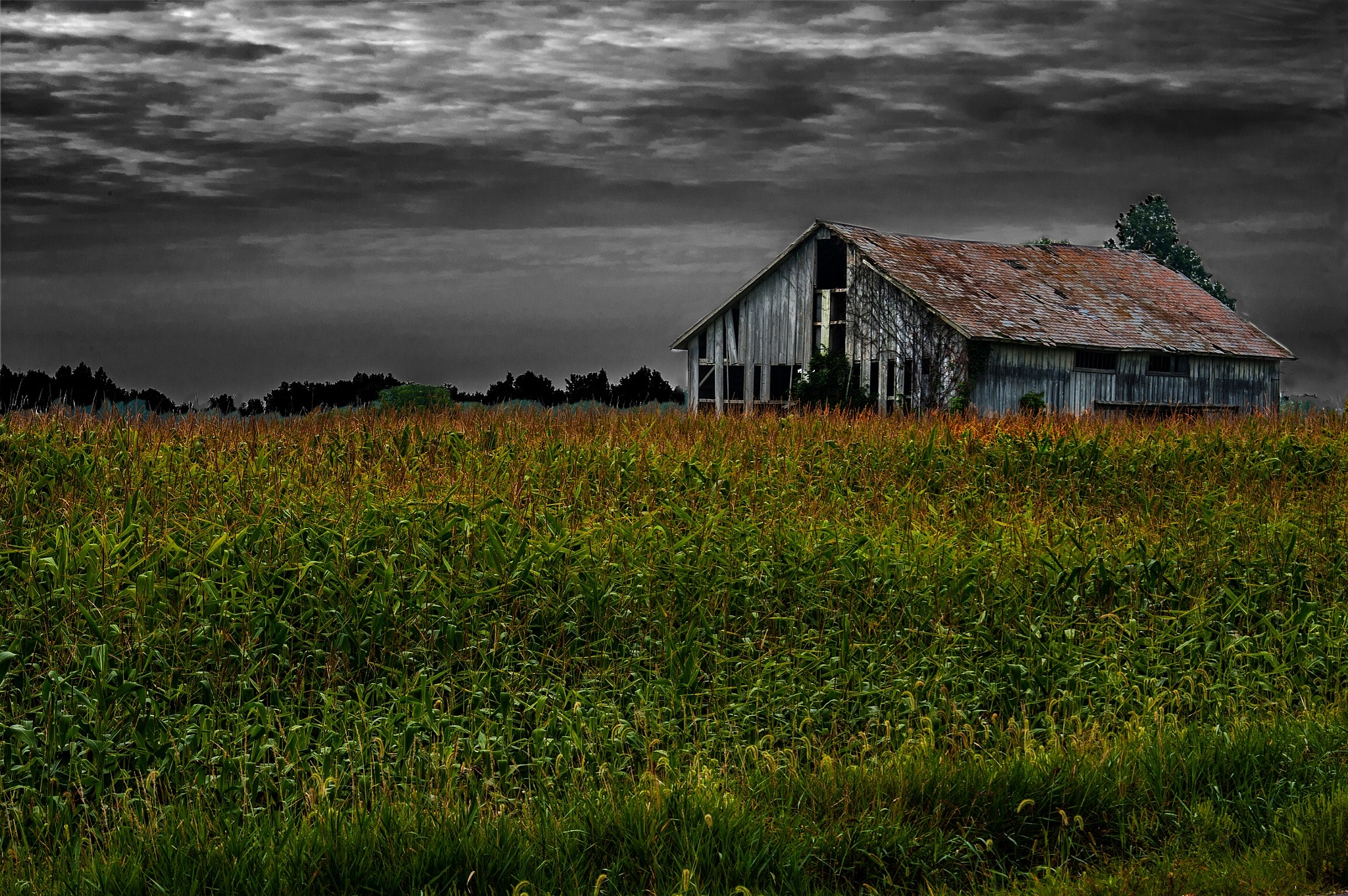 Abandoned Apple Farm in Northern Ohio  by Walter Novak