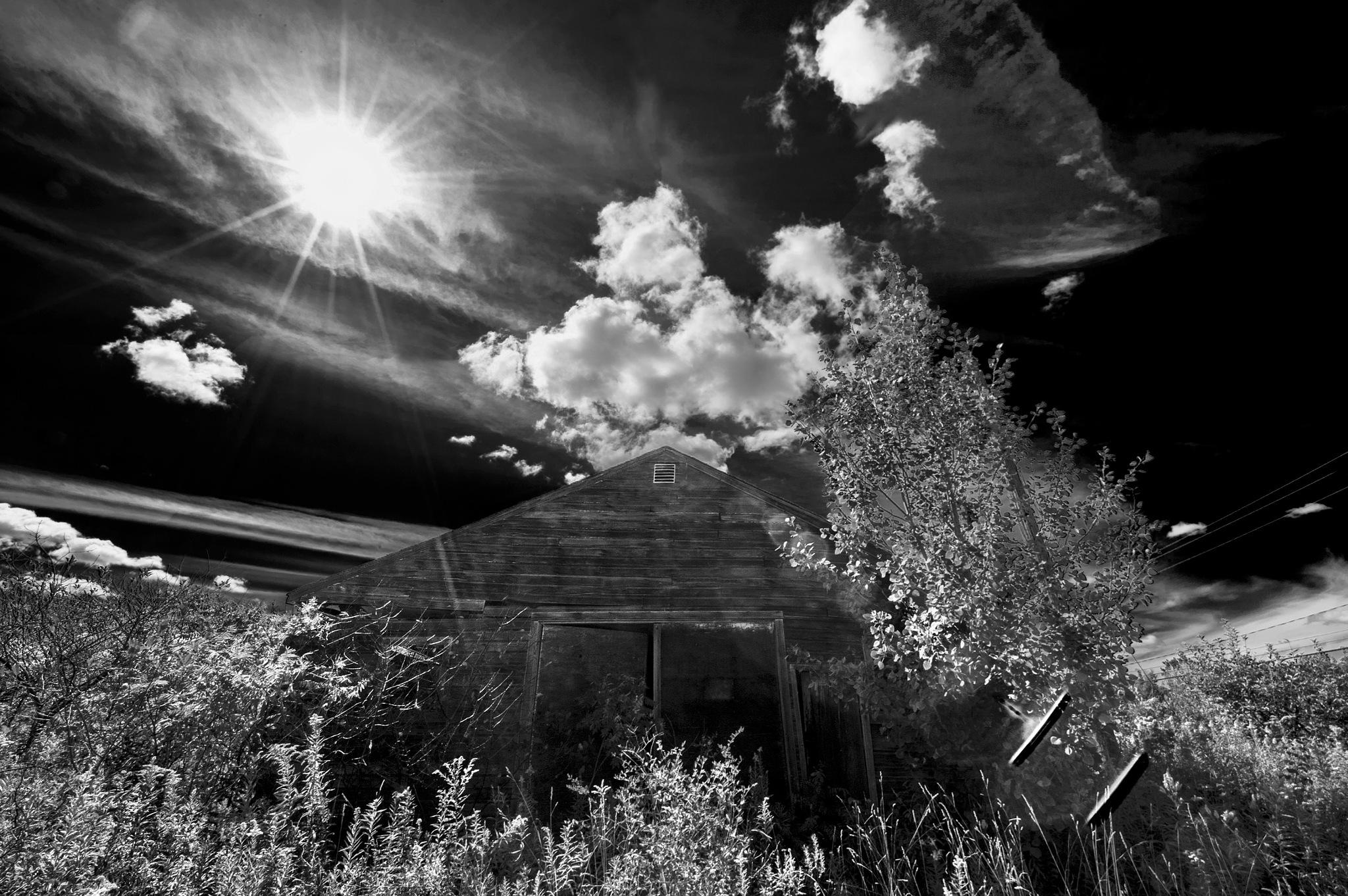 Abandoned Apple Farm,Ohio by Walter Novak