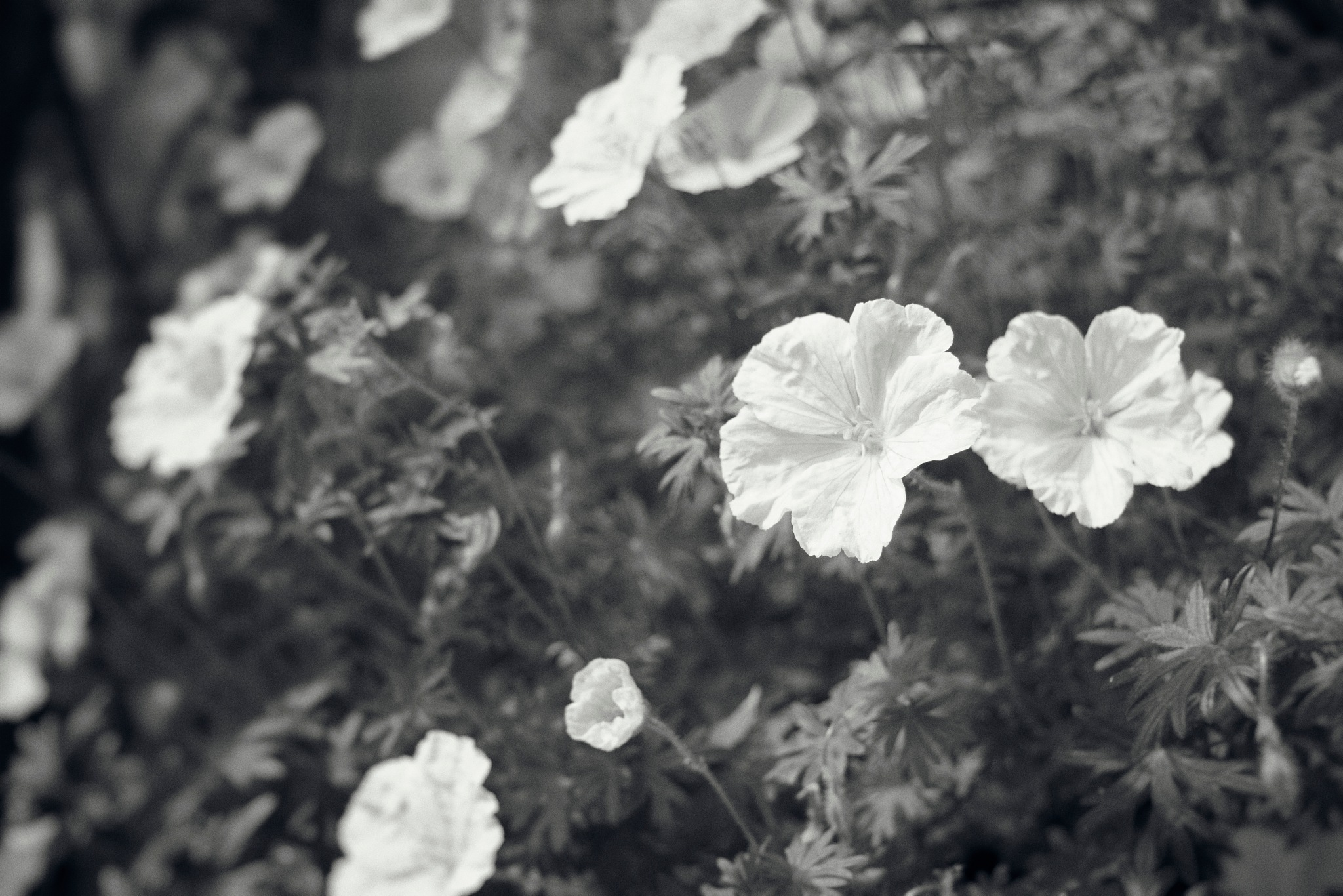 Little White Flowers by In Praise Of Shadows