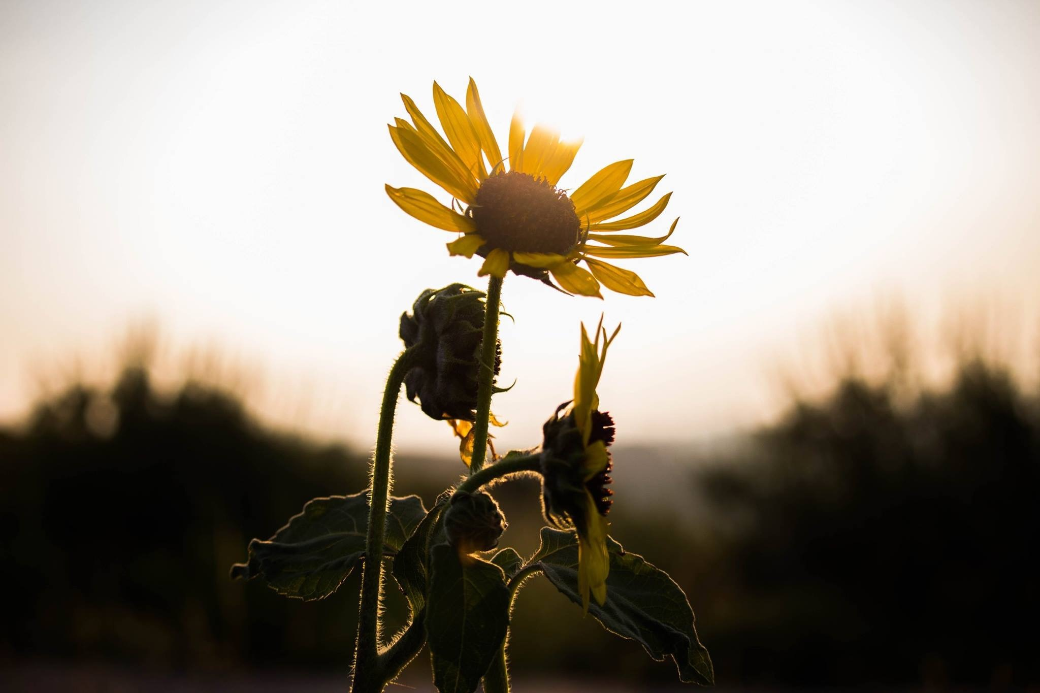 Flower by Kimberly Nicole Thornton