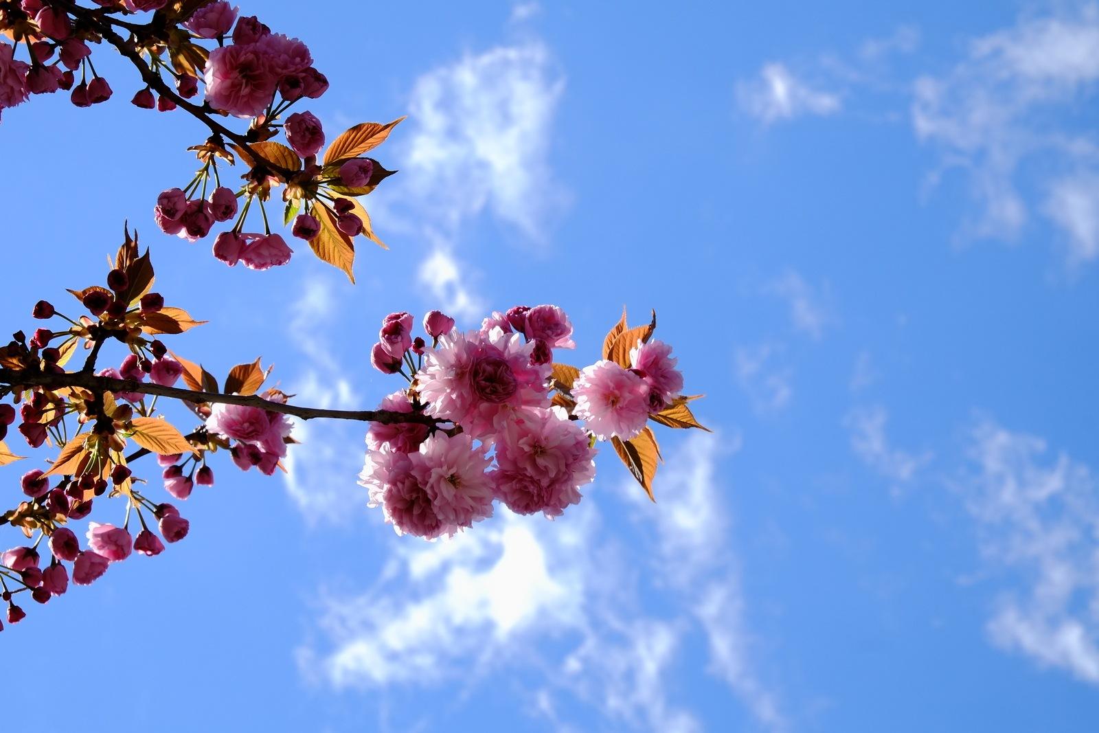 Spring by Fabio Peloso