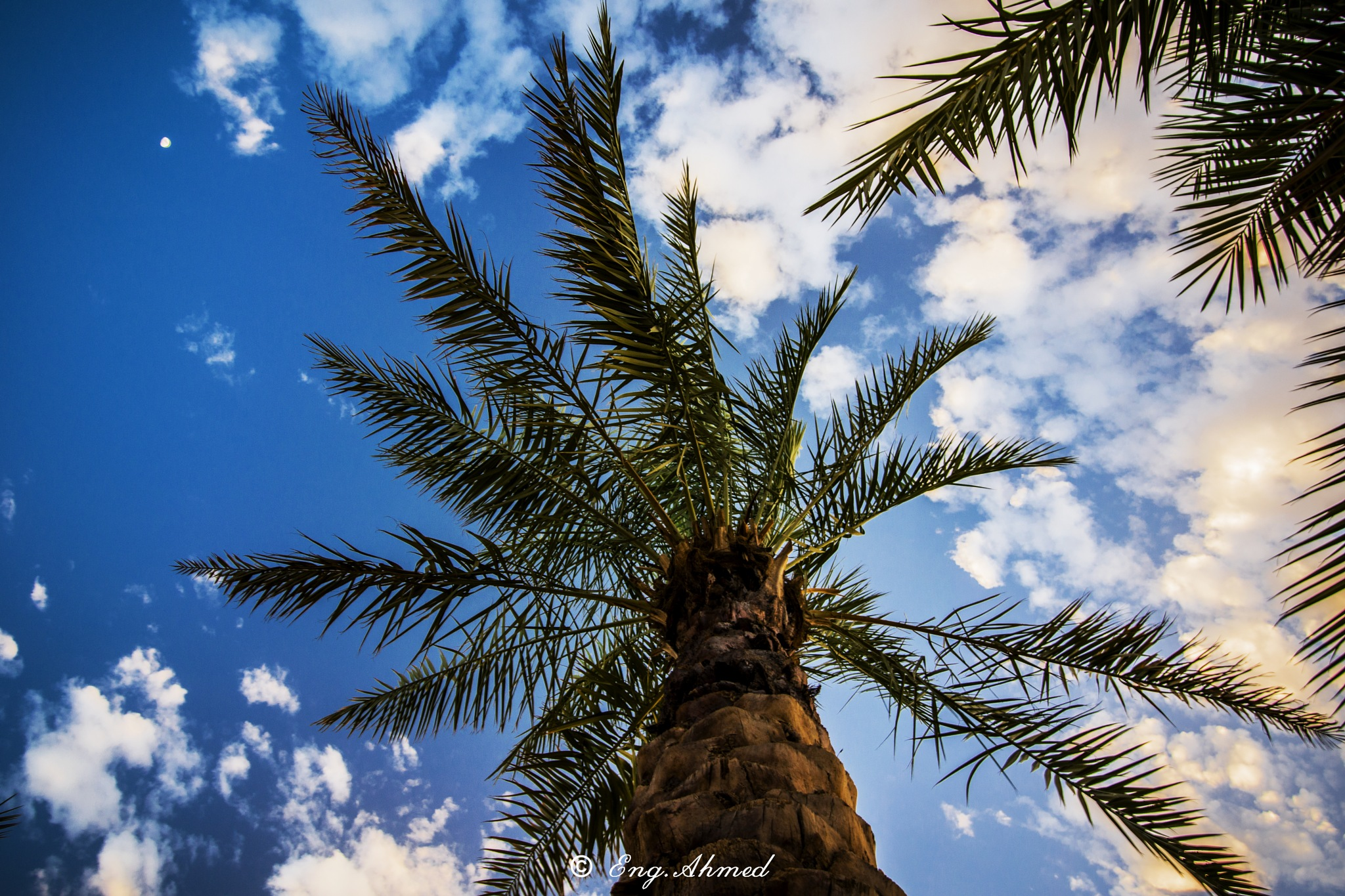 Untitled by Eng Ahmed Gaber