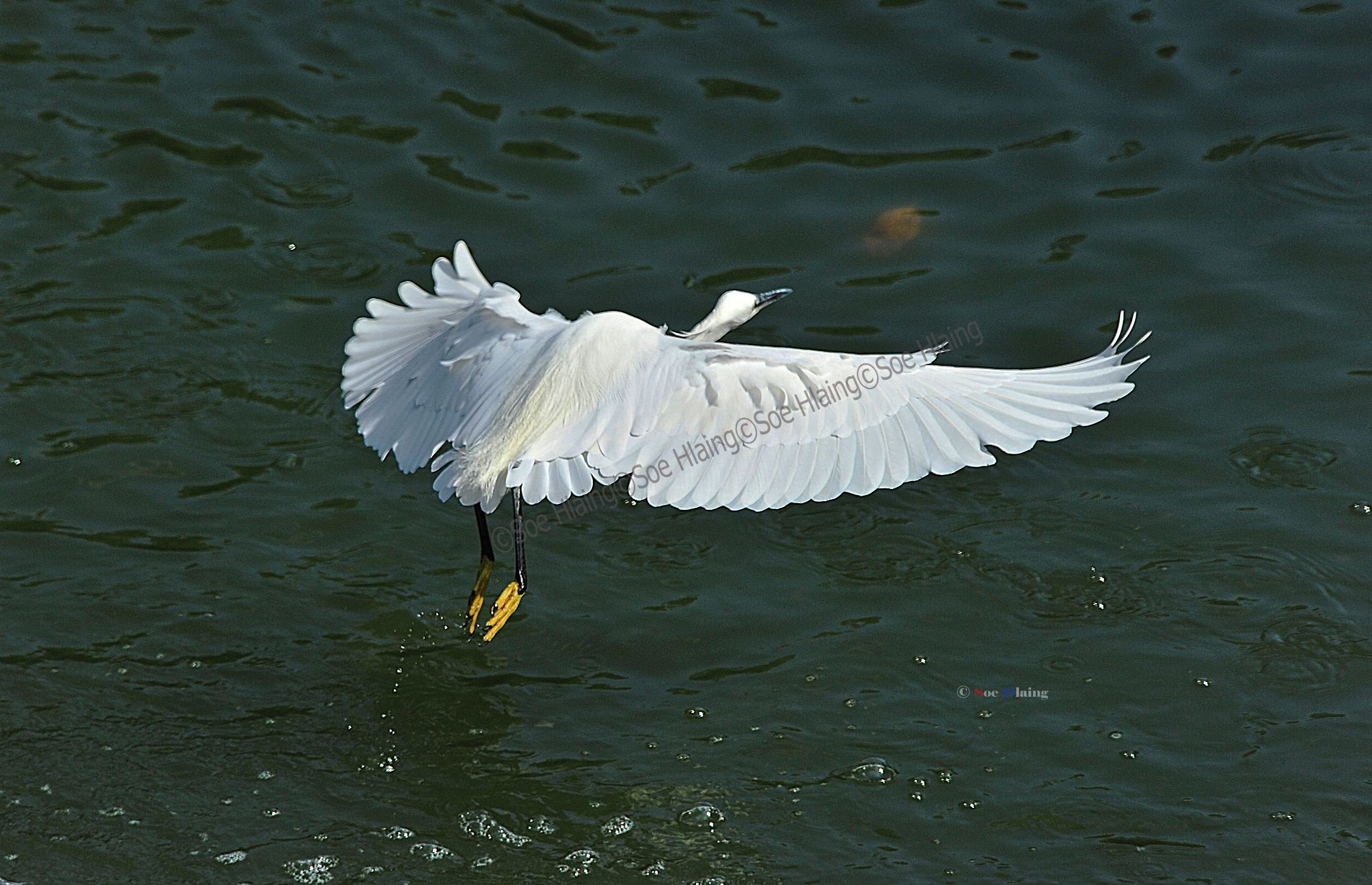 Fly Away white  by SoeHlaing
