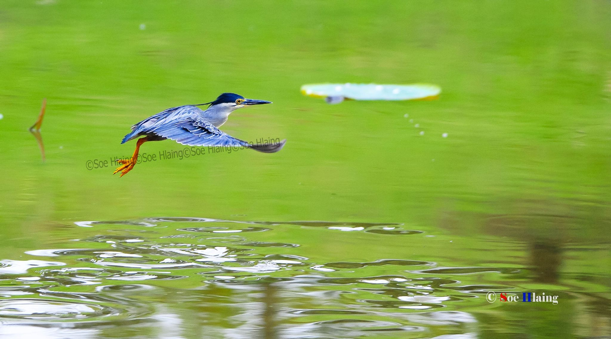 Lonesome, Flying One. by SoeHlaing