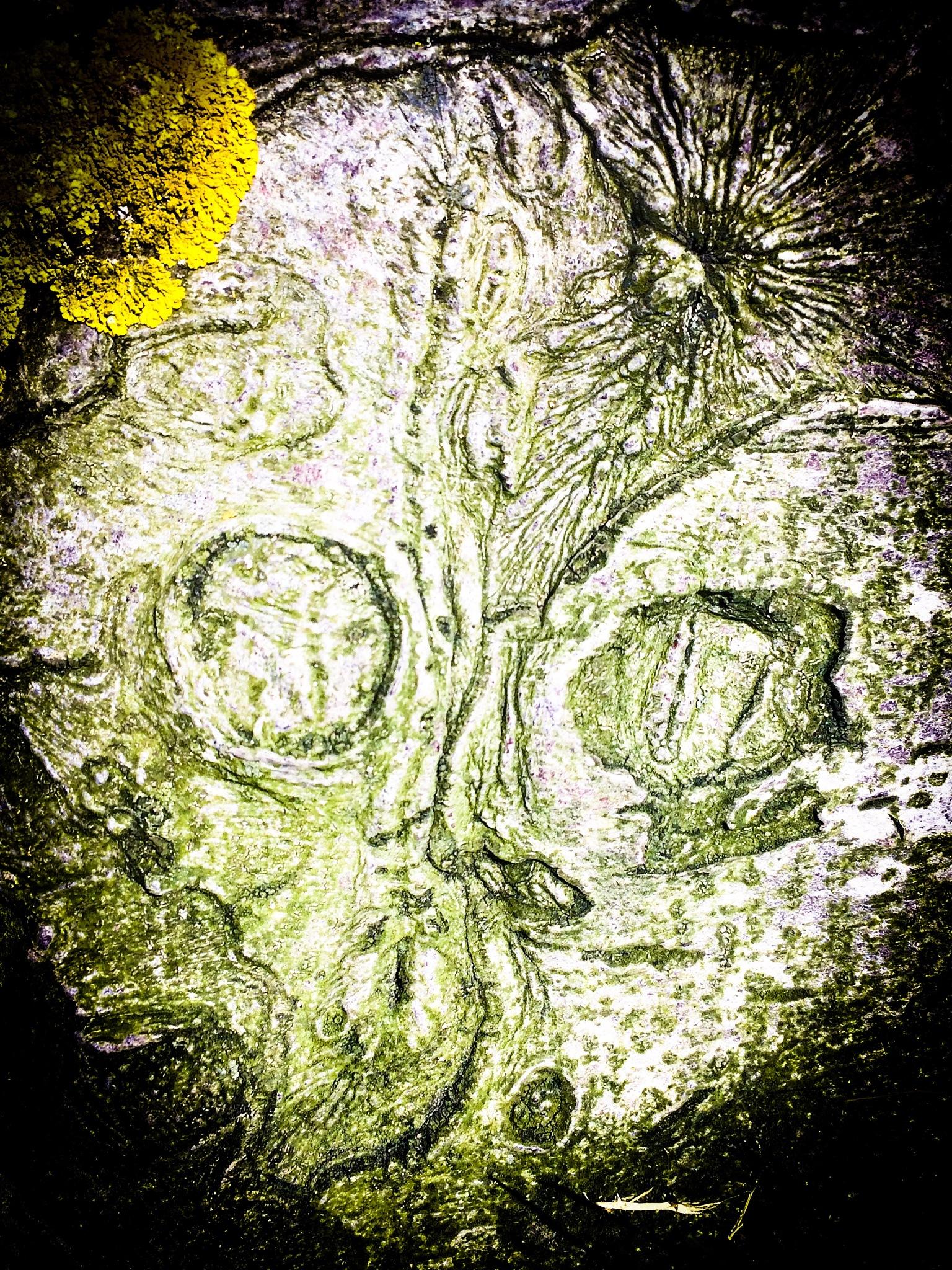 Alien Tree Bark by Tracey Glazebrook