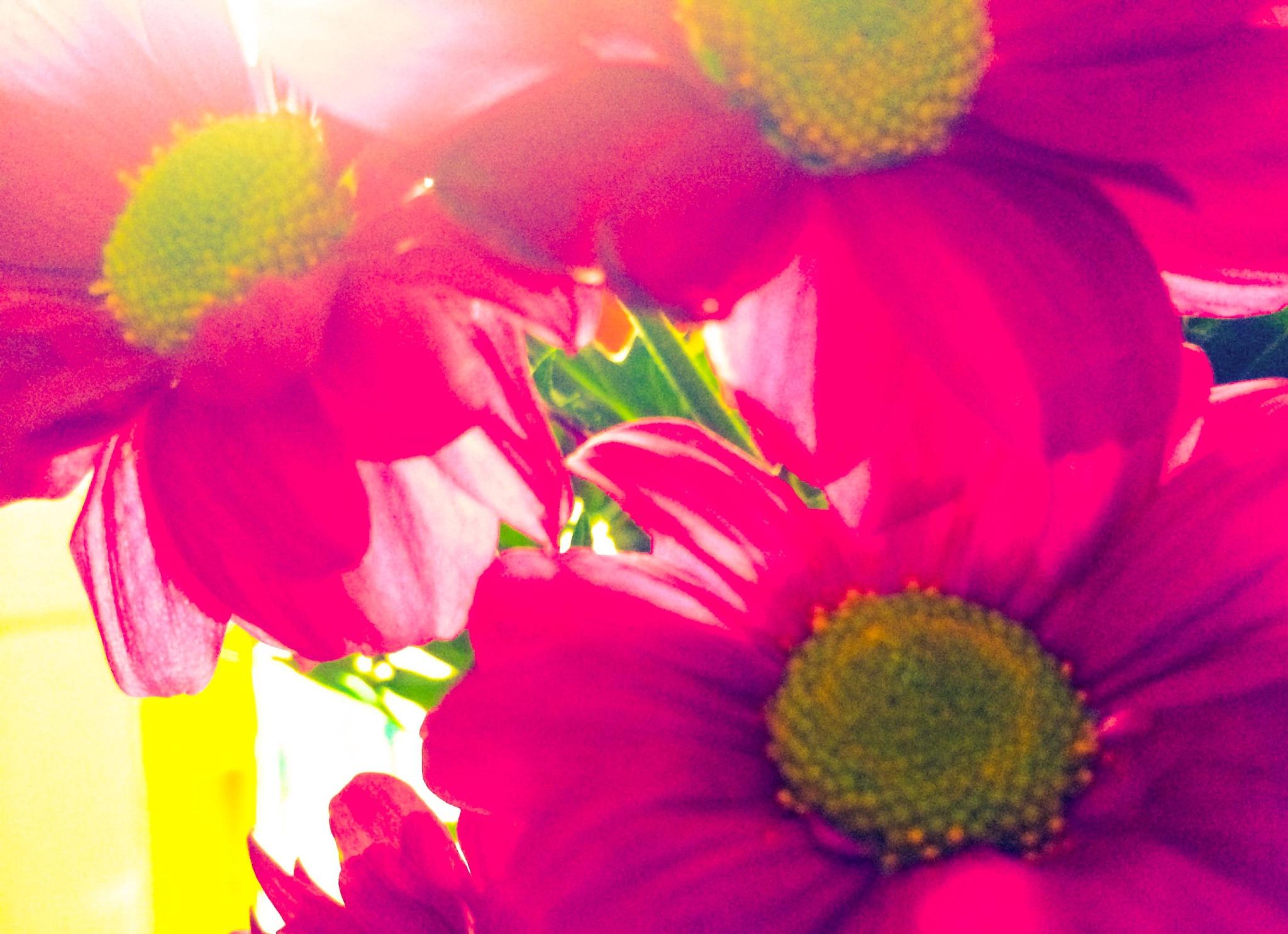 Sam's Flowers  by Tracey Glazebrook
