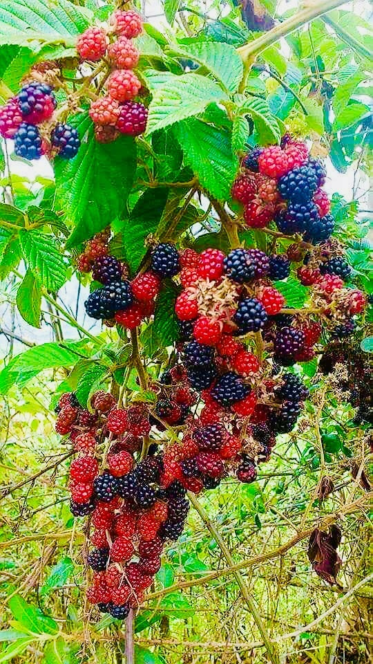 Berries  by ceciliacarcamo