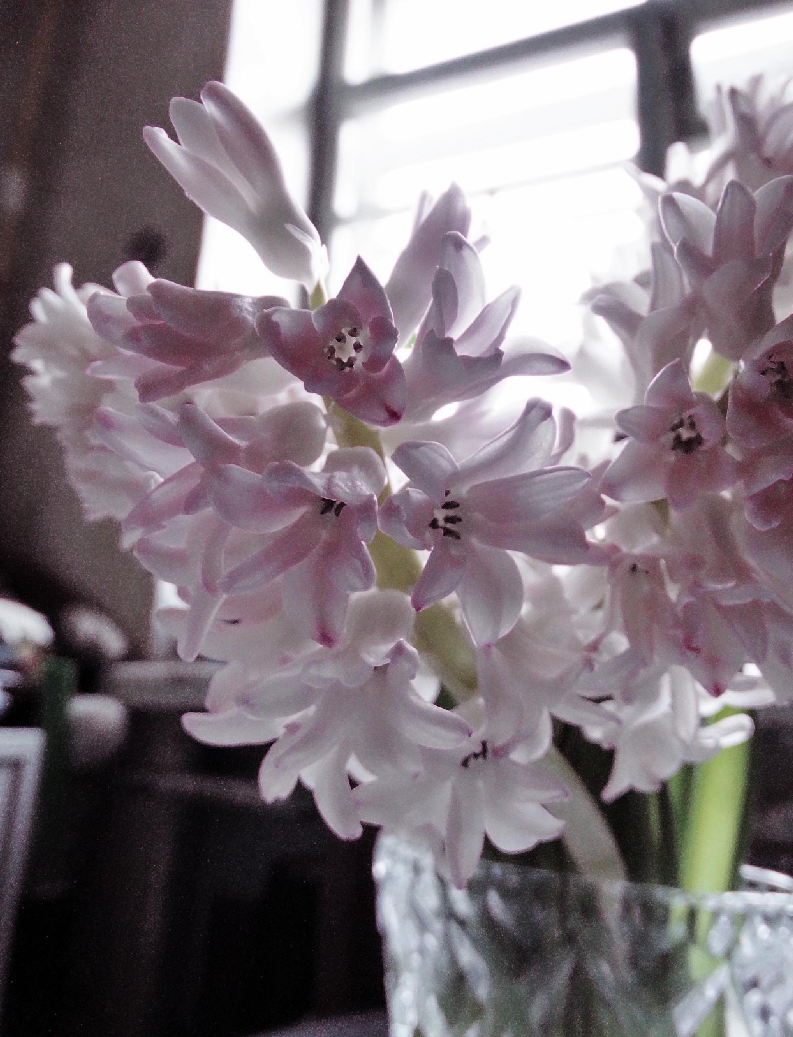 Розовые грёзы by tarutinaolga2012