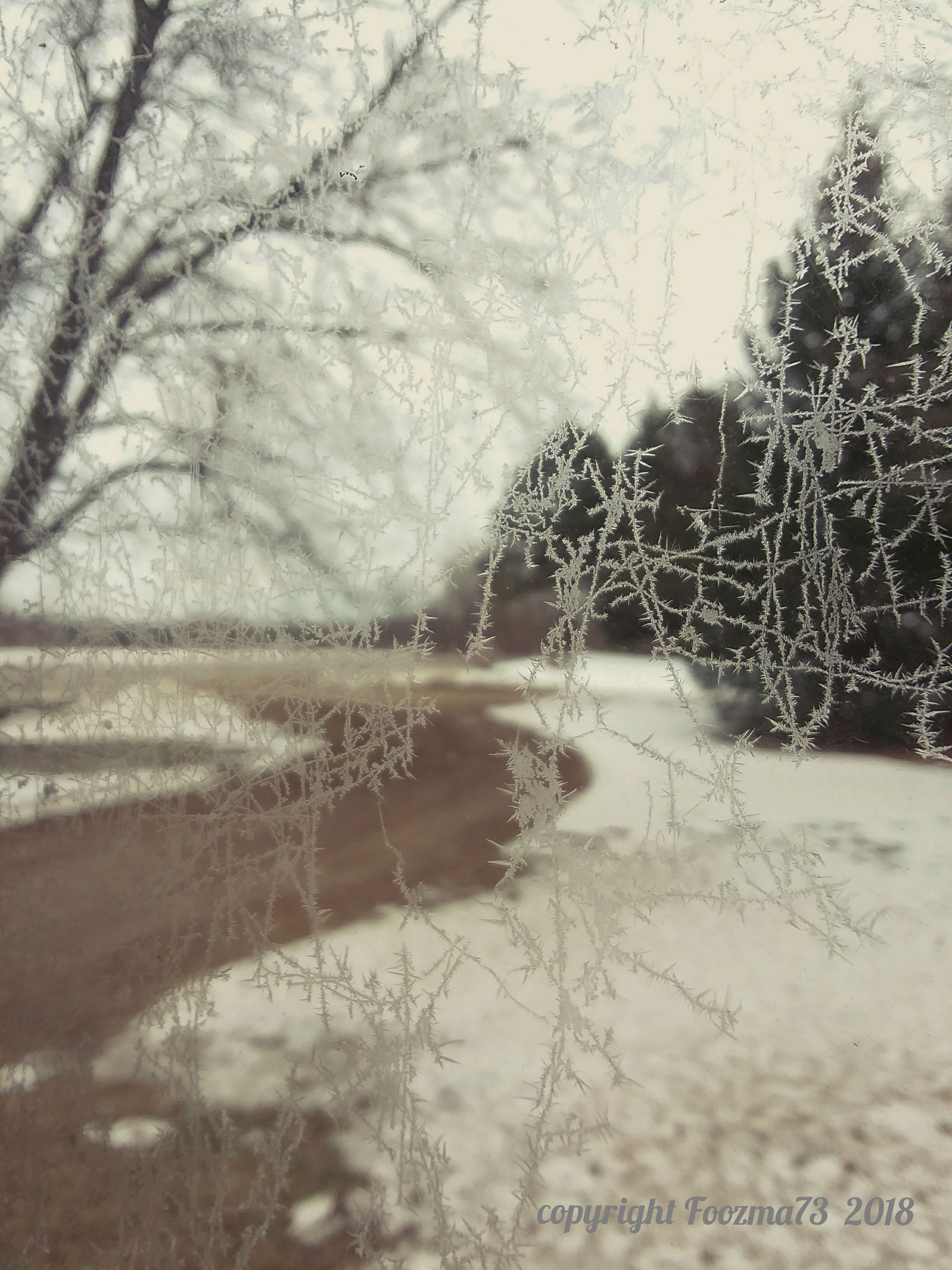 .frost-lines. by Jennifer A. Wheaton