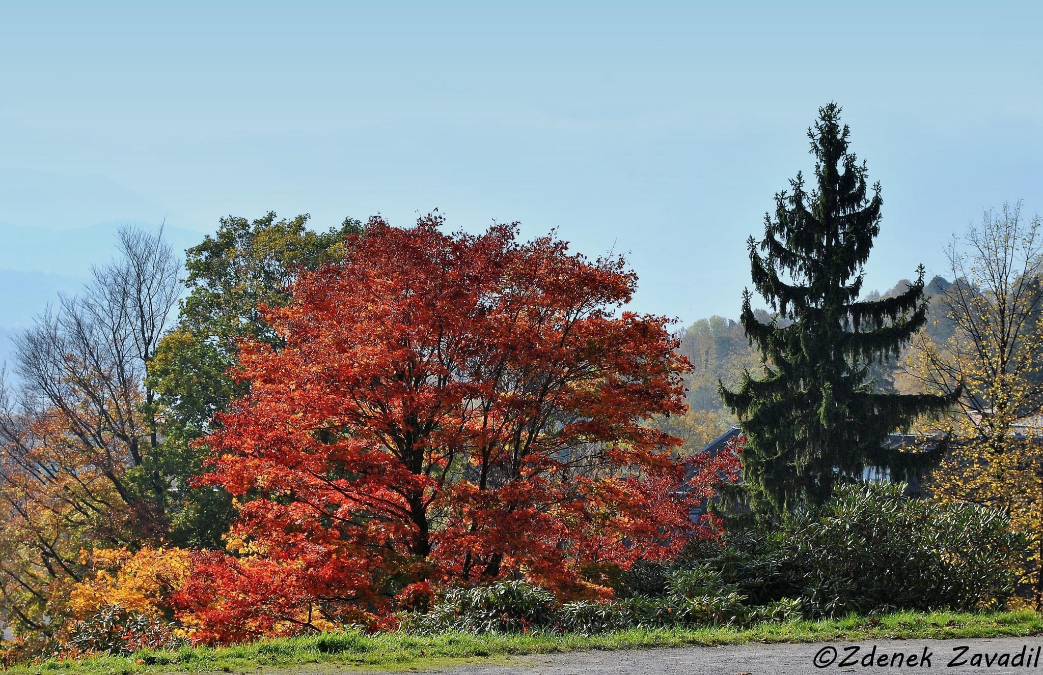 Photo in Landscape #autumn #landscape #nature #colors