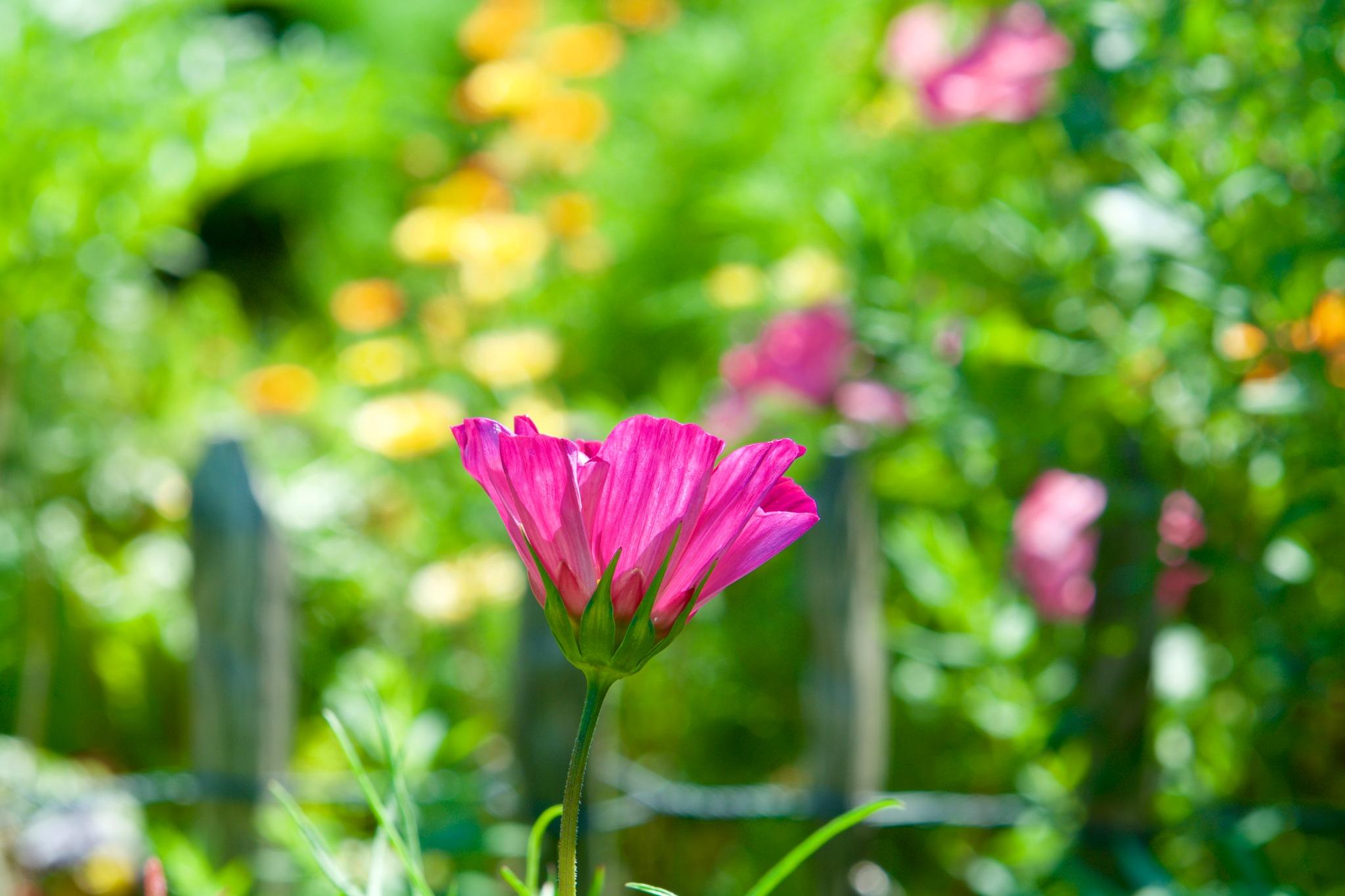Flowers 188! by Memed Bayatli