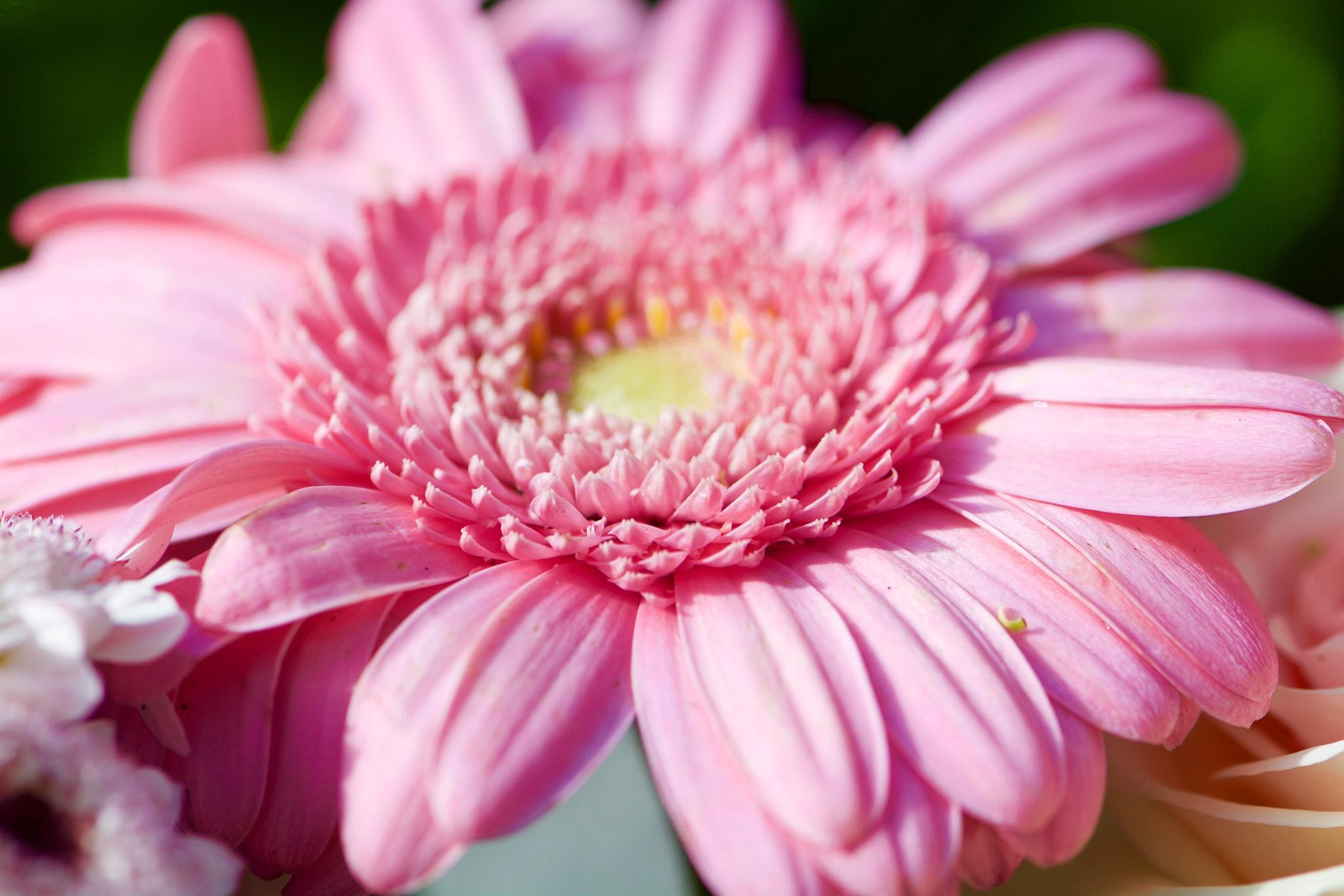 Flowers 187! by Memed Bayatli