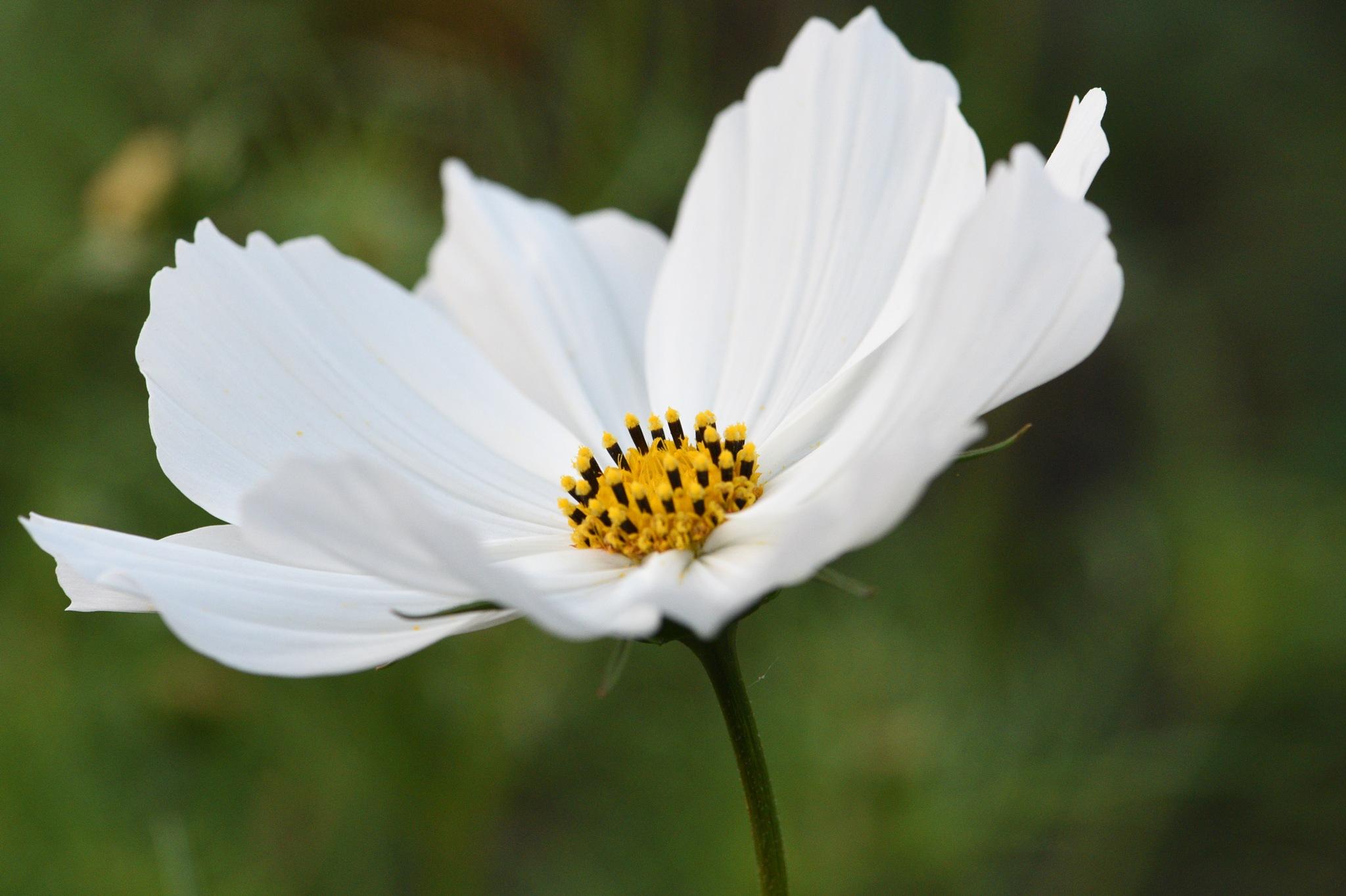 Flowers 611! by Memed Bayatli