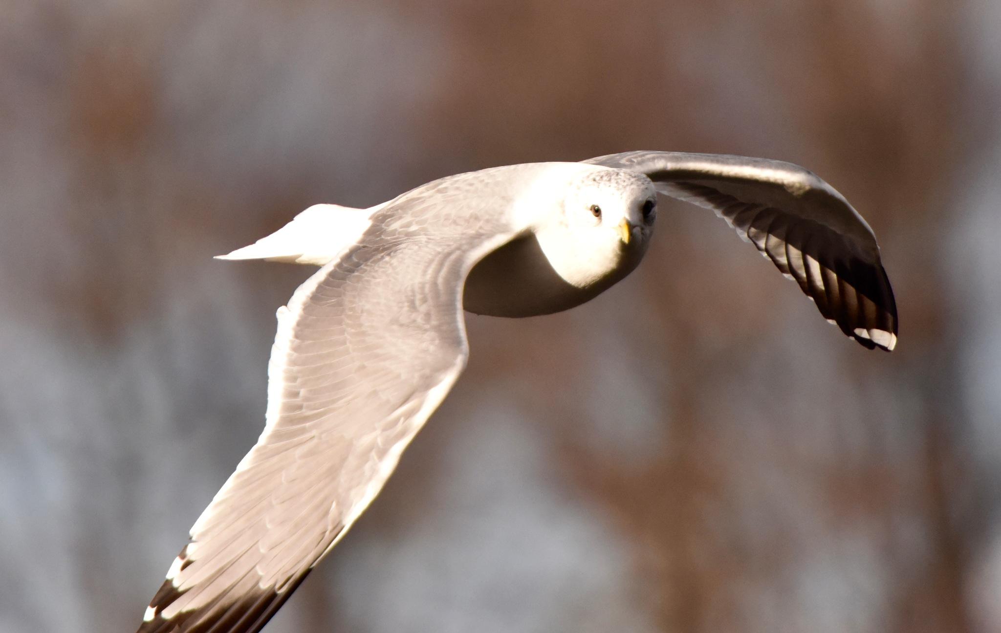 Bird 77! by Memed Bayatli