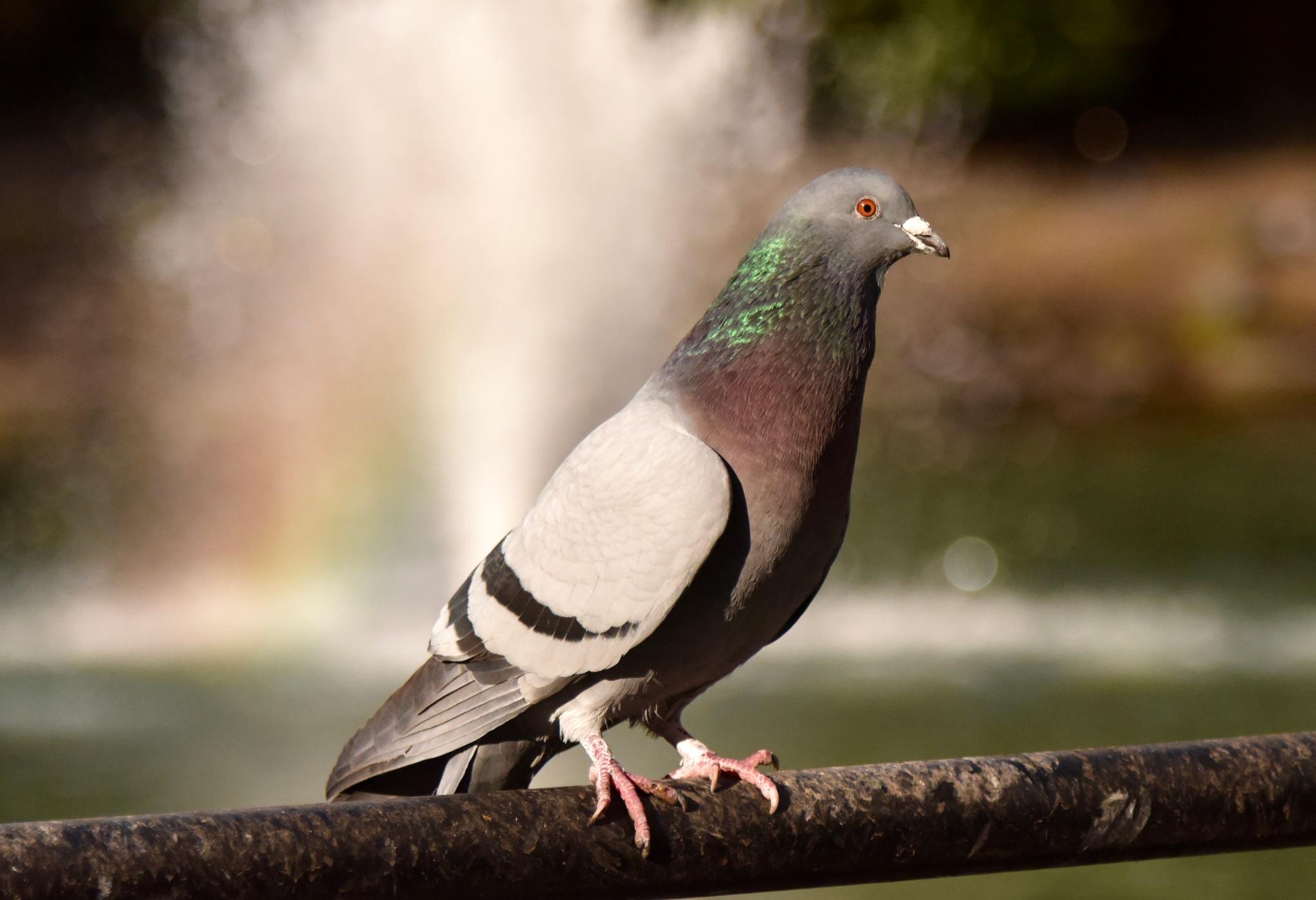 Bird 89! by Memed Bayatli