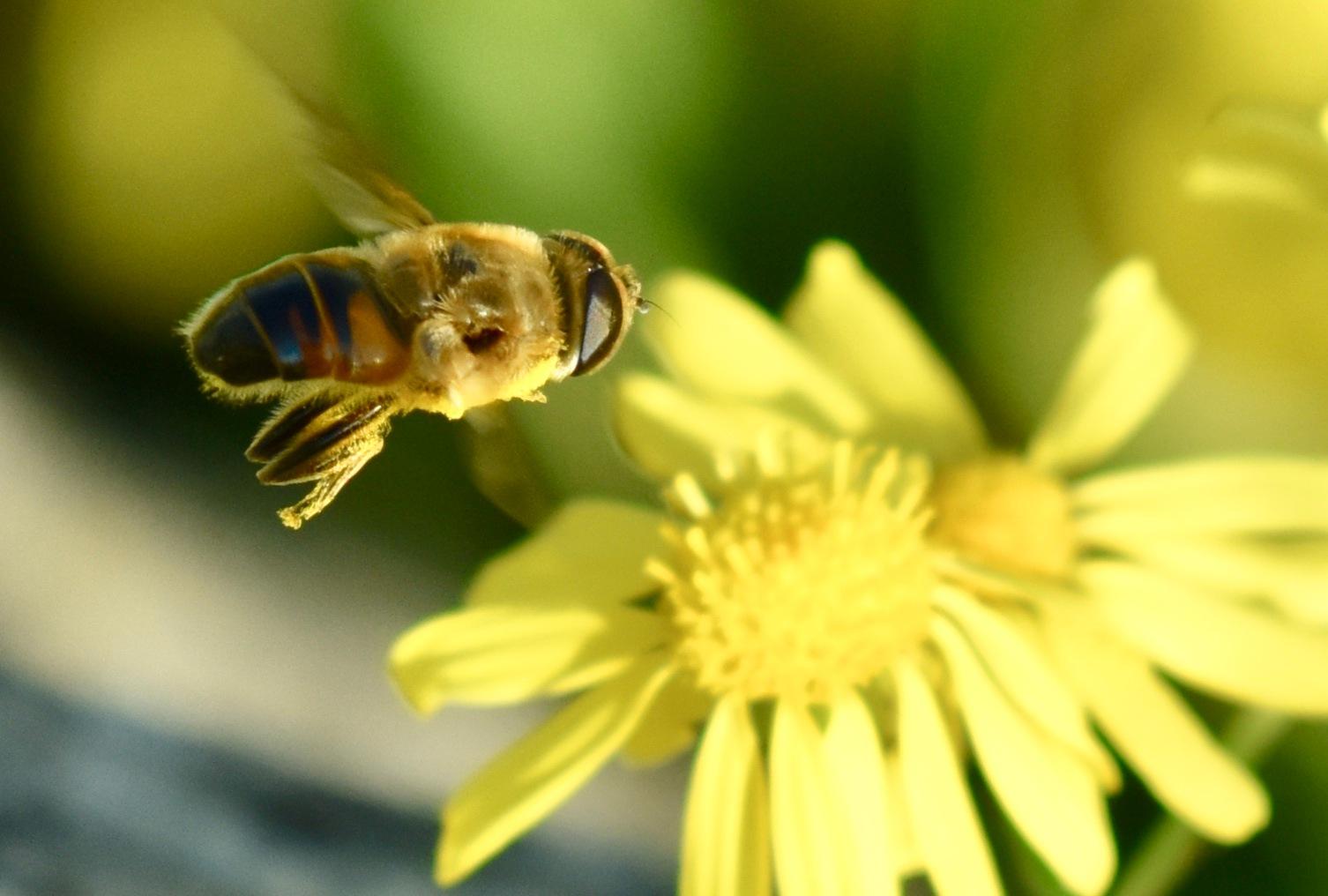 Bee 7007! by Memed Bayatli