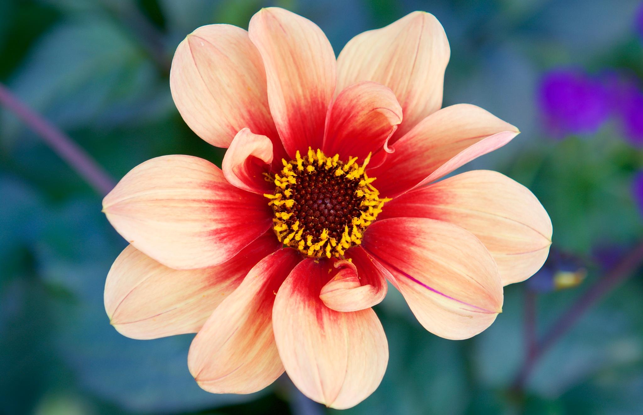 Flowers 500! by Memed Bayatli