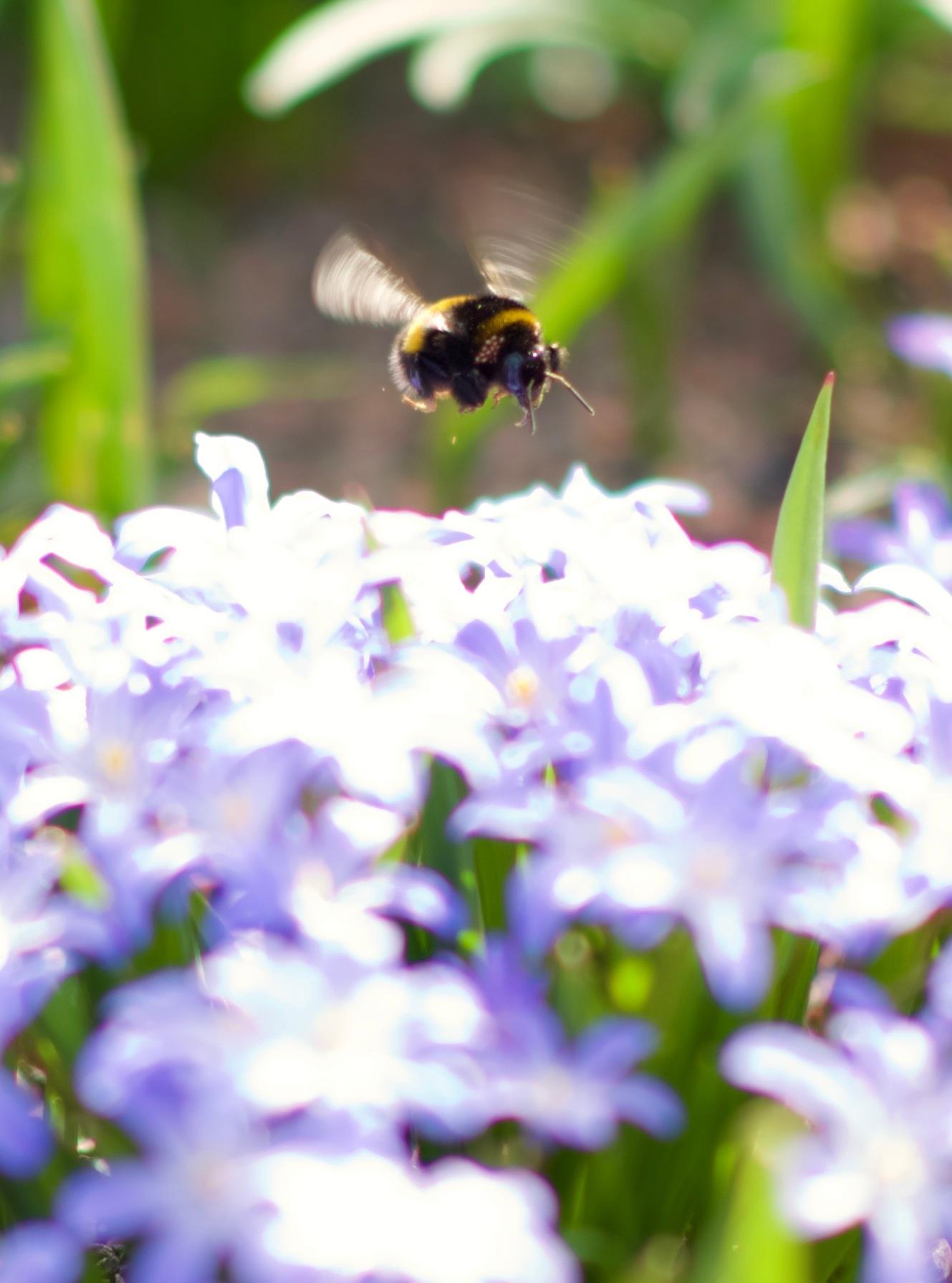 flying bee! by Memed Bayatli