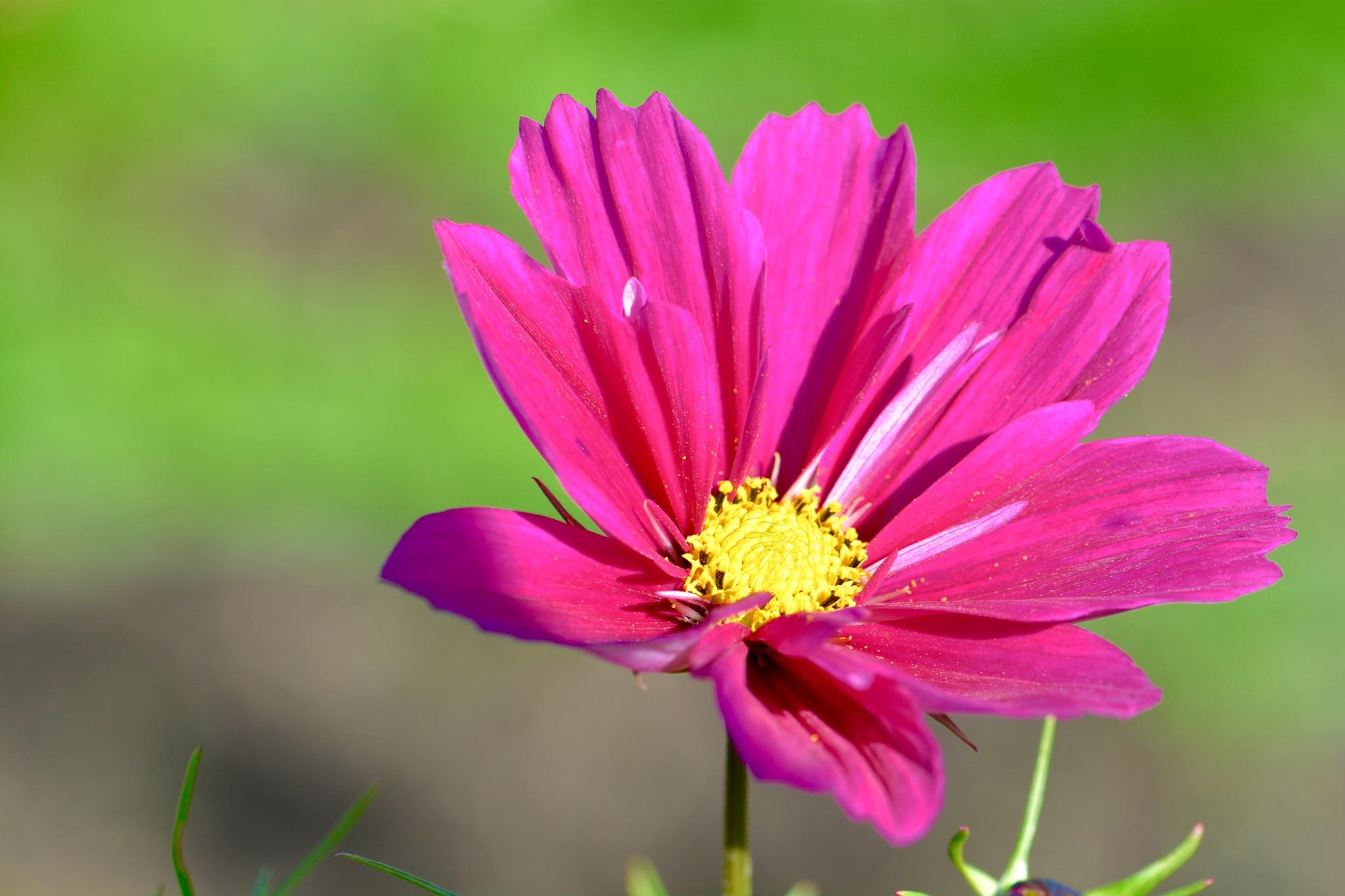Flowers 981! by Memed Bayatli