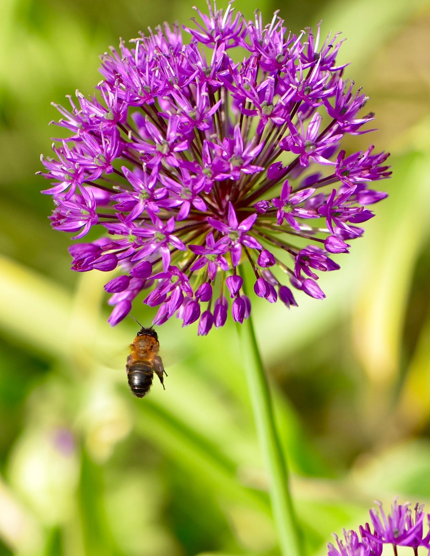 Bee 87! by Memed Bayatli