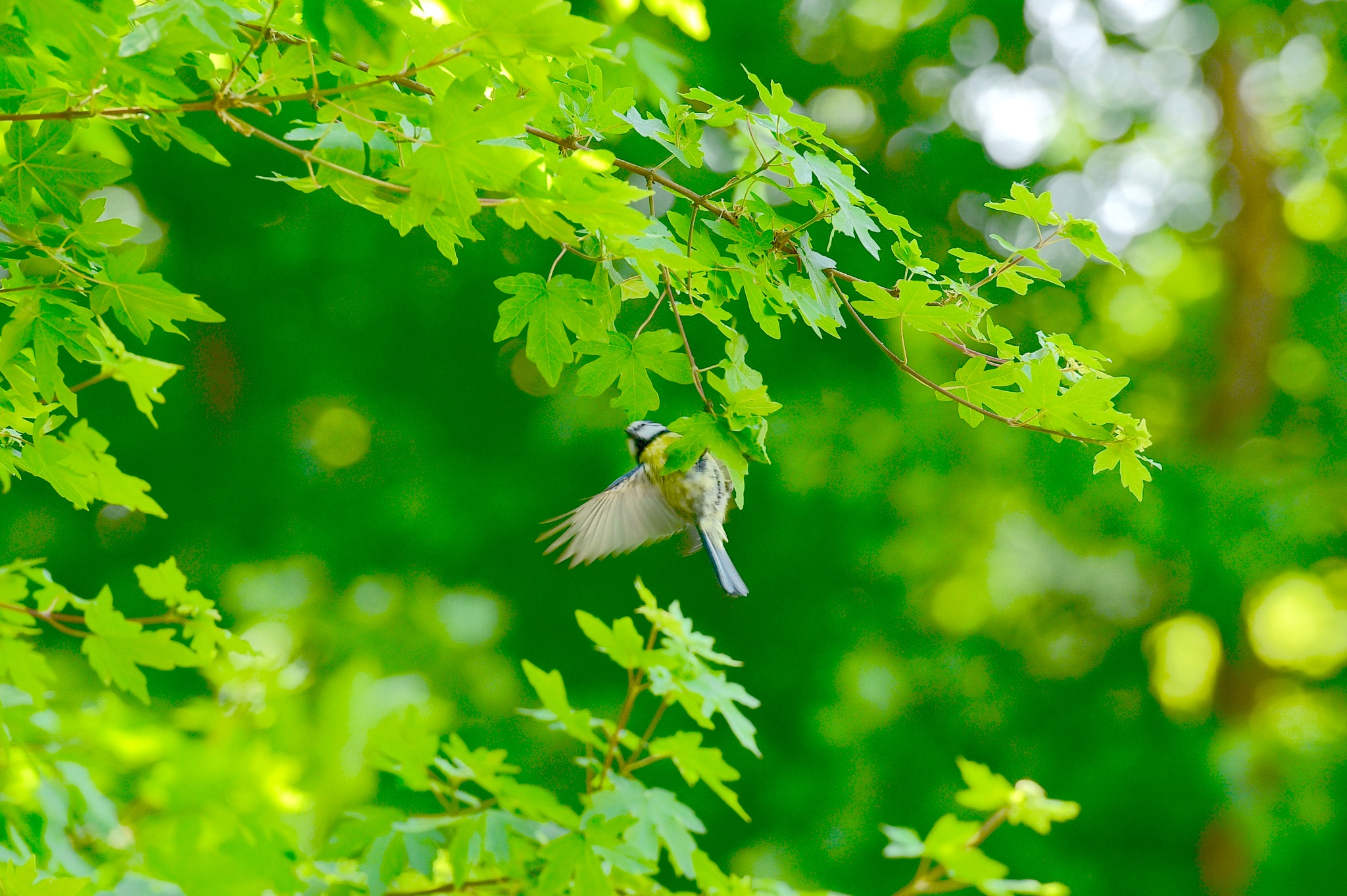 Bird 996! by Memed Bayatli