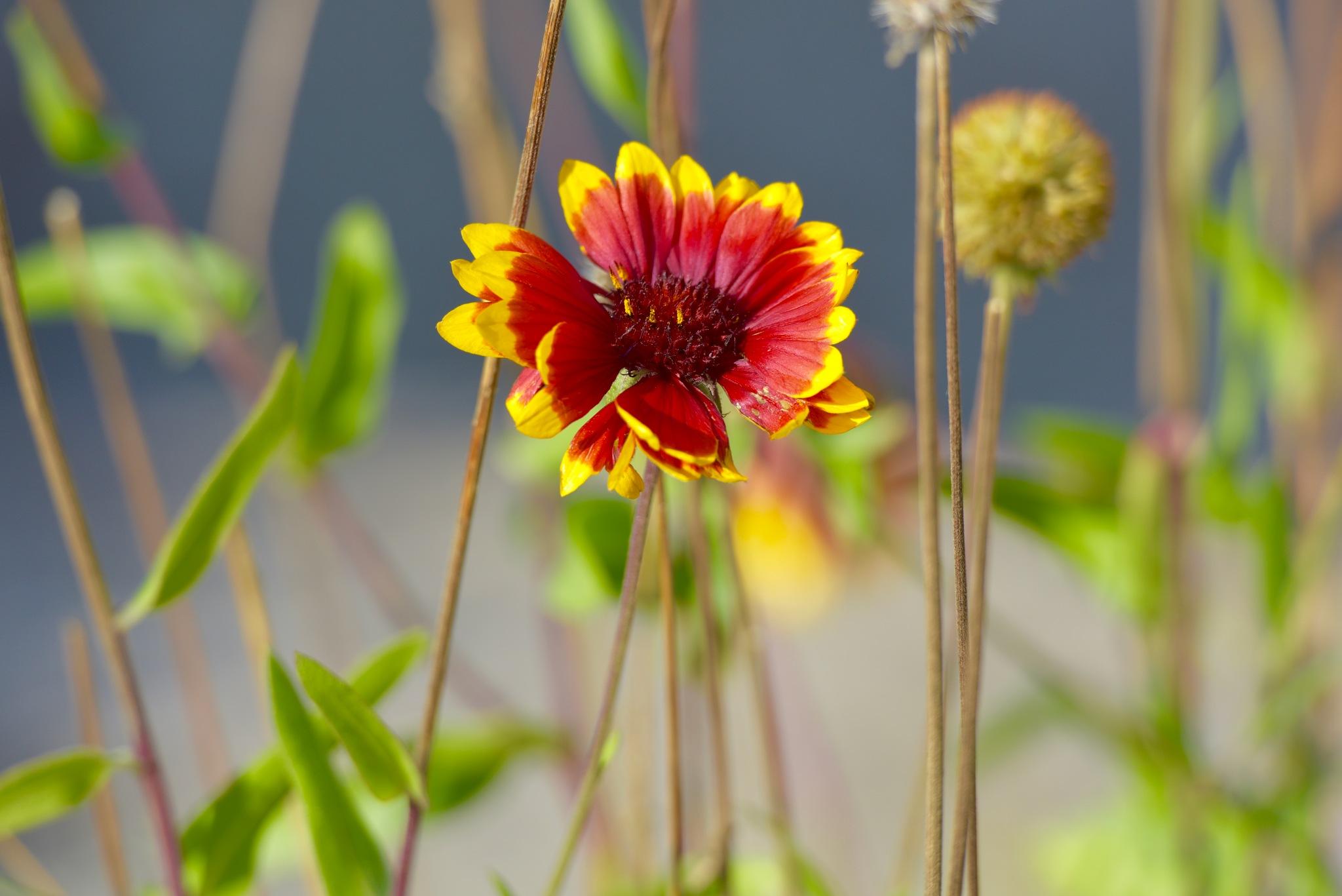 Flowers 4422! by Memed Bayatli