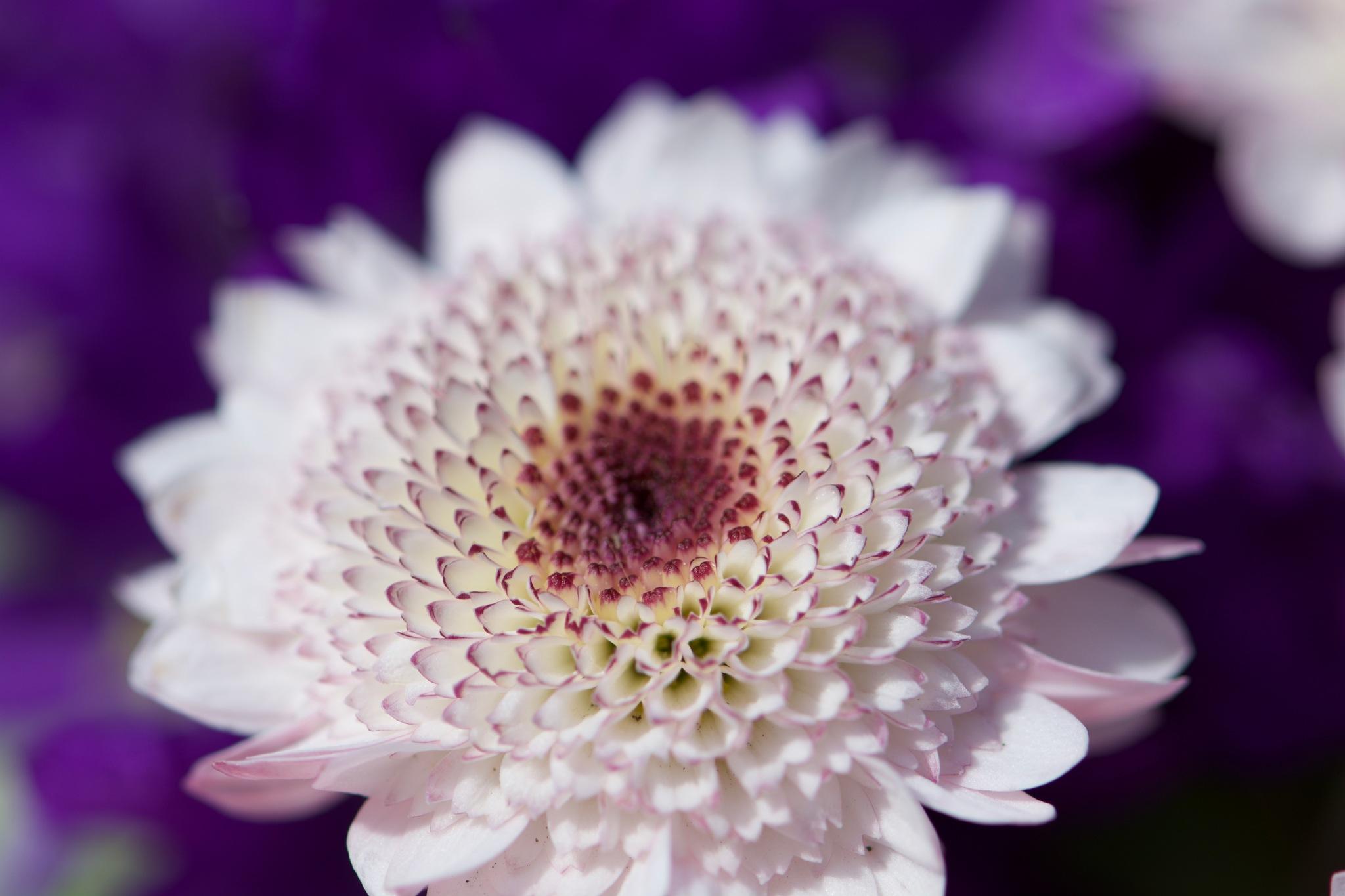 Flowers 131! by Memed Bayatli