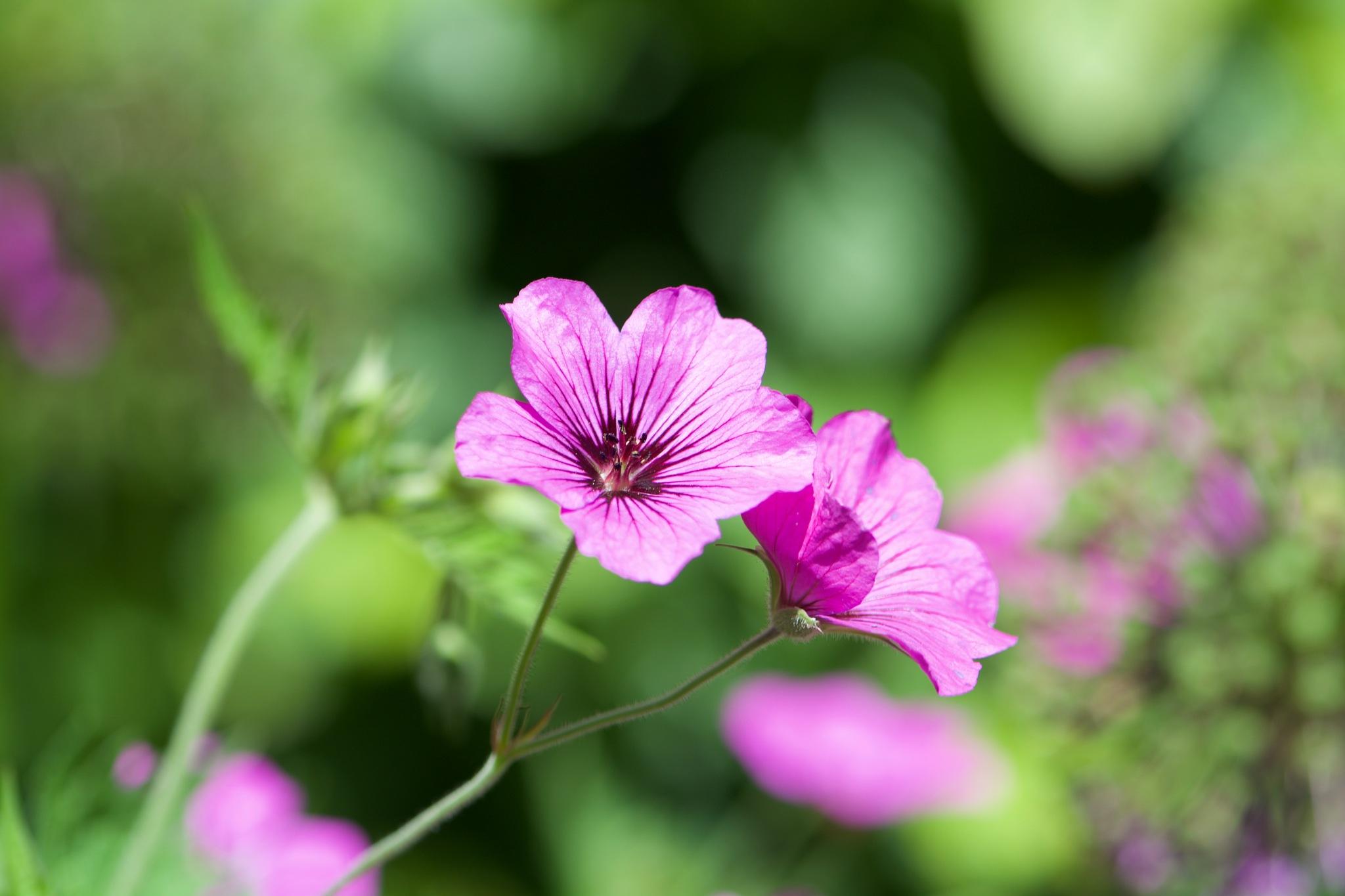 Flowers 123! by Memed Bayatli
