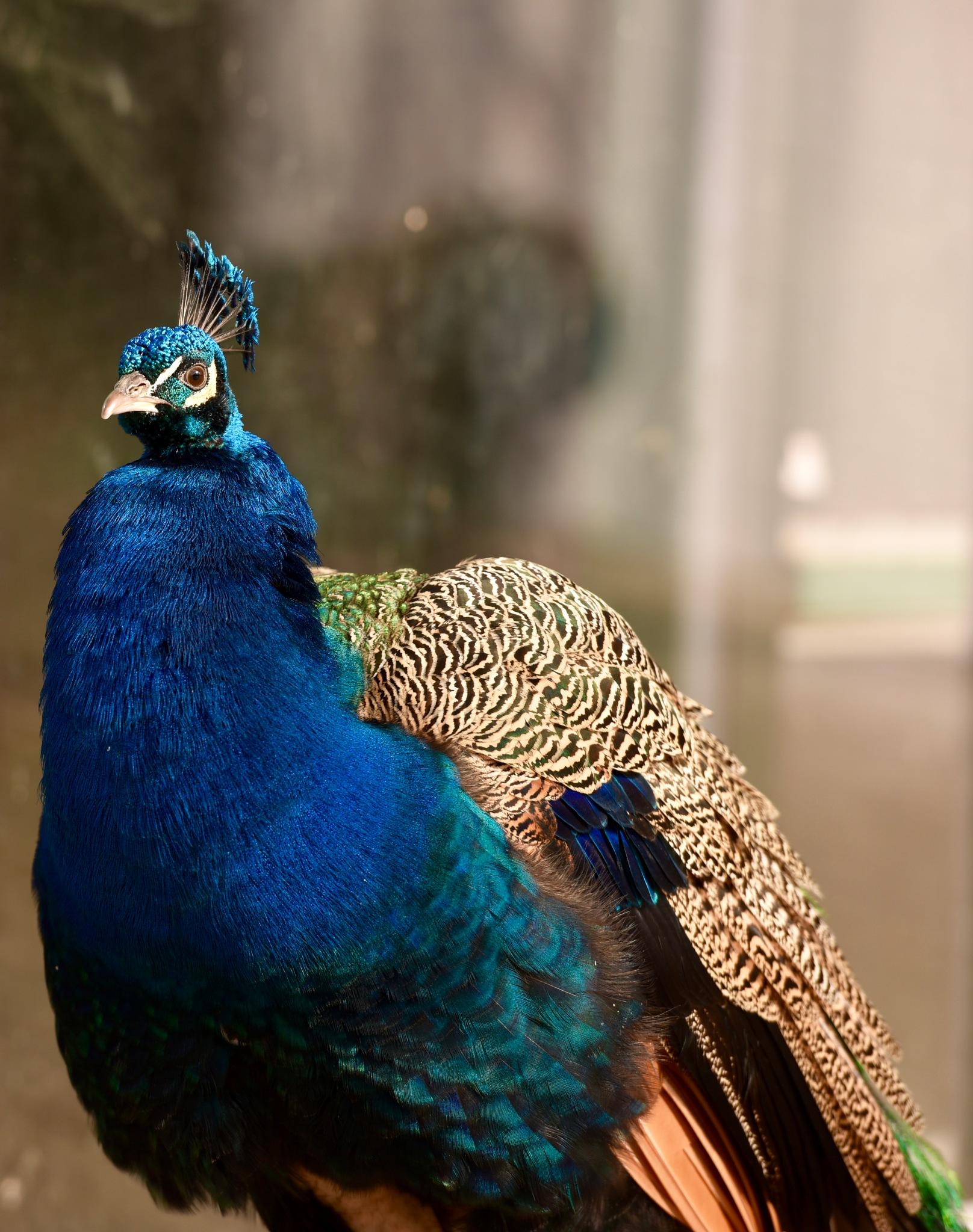 Bird 5! by Memed Bayatli