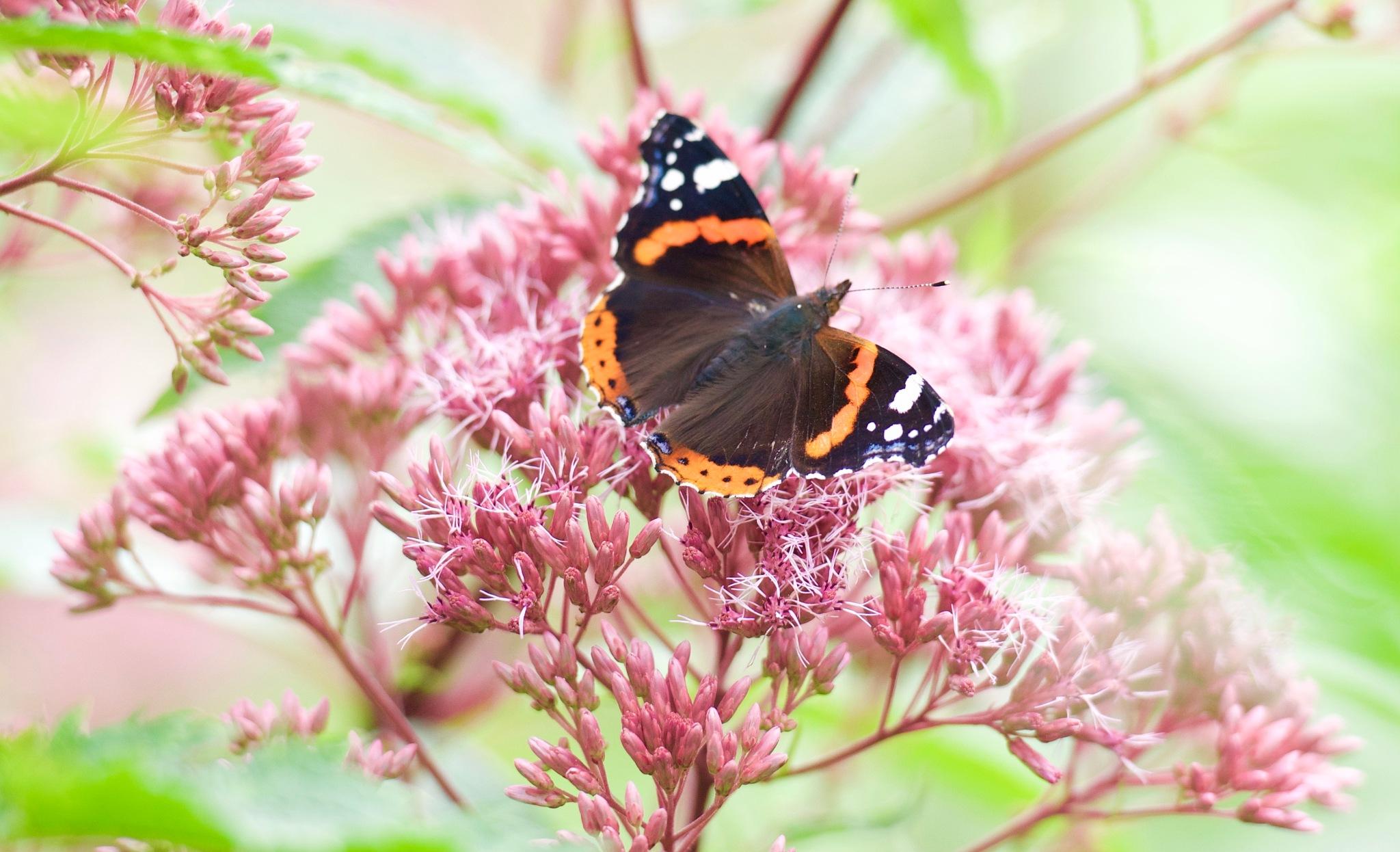 Butterfly 190! by Memed Bayatli