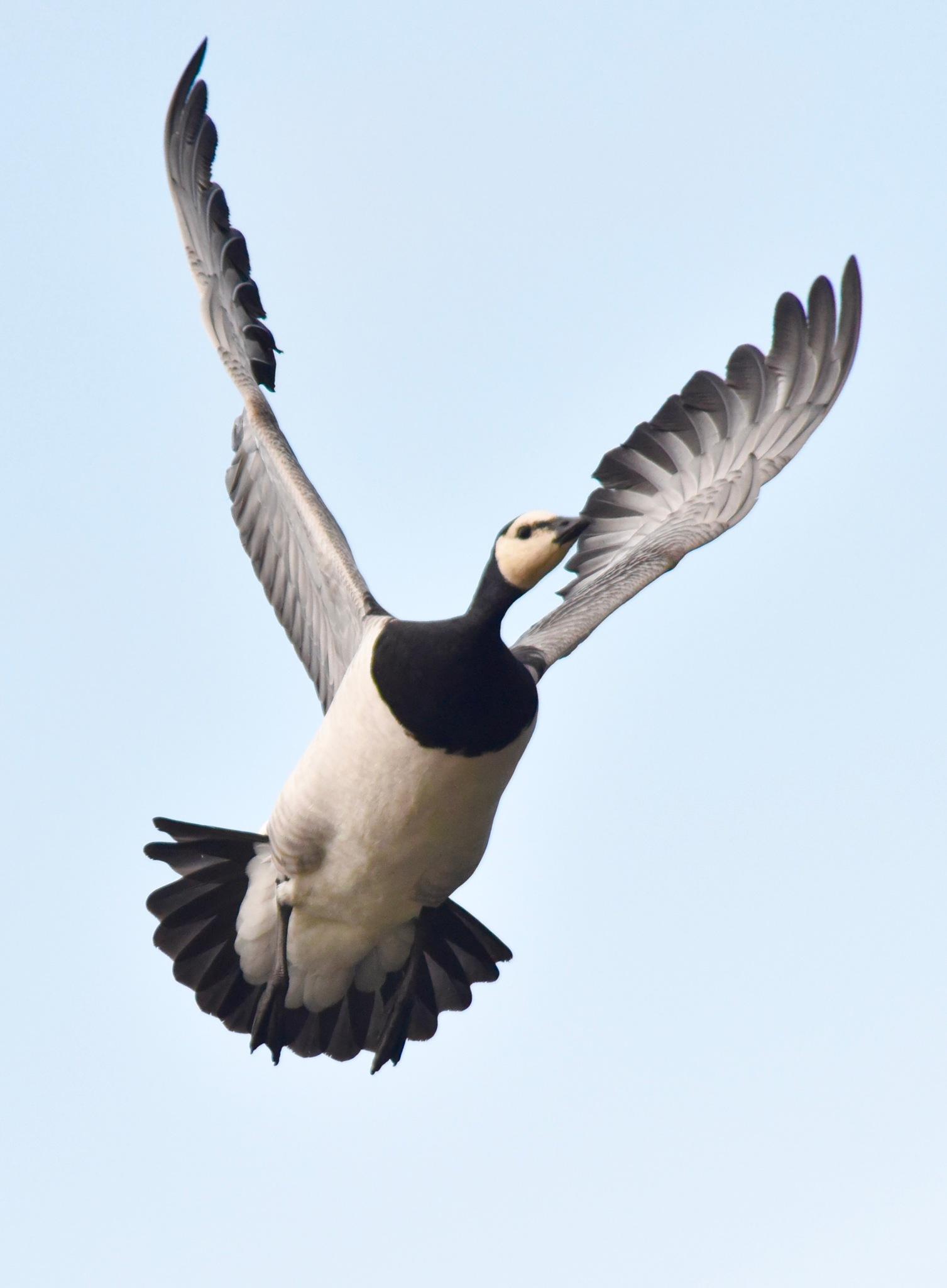 Bird 31! by Memed Bayatli