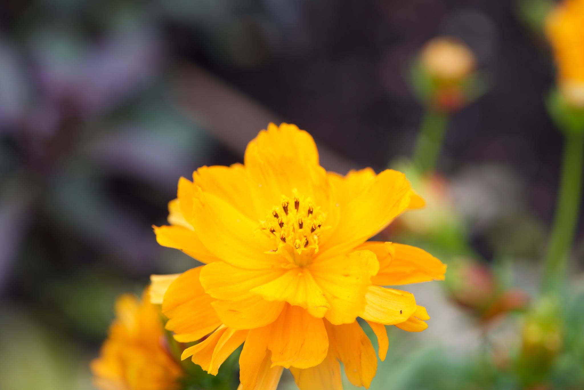 Flowers 9145! by Memed Bayatli