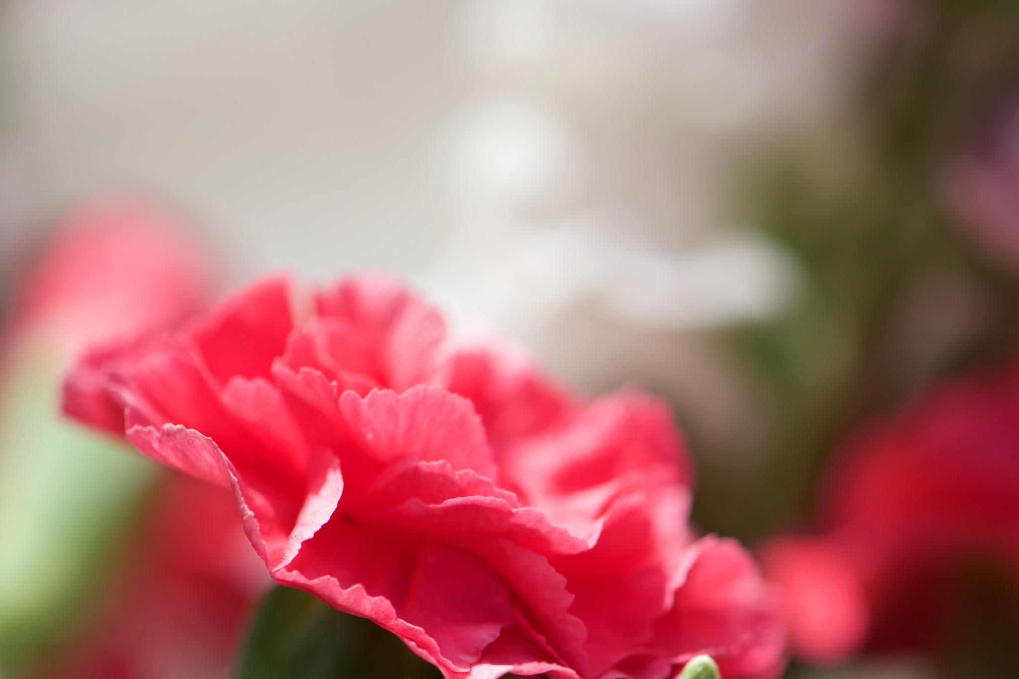 Flowers 184! by Memed Bayatli