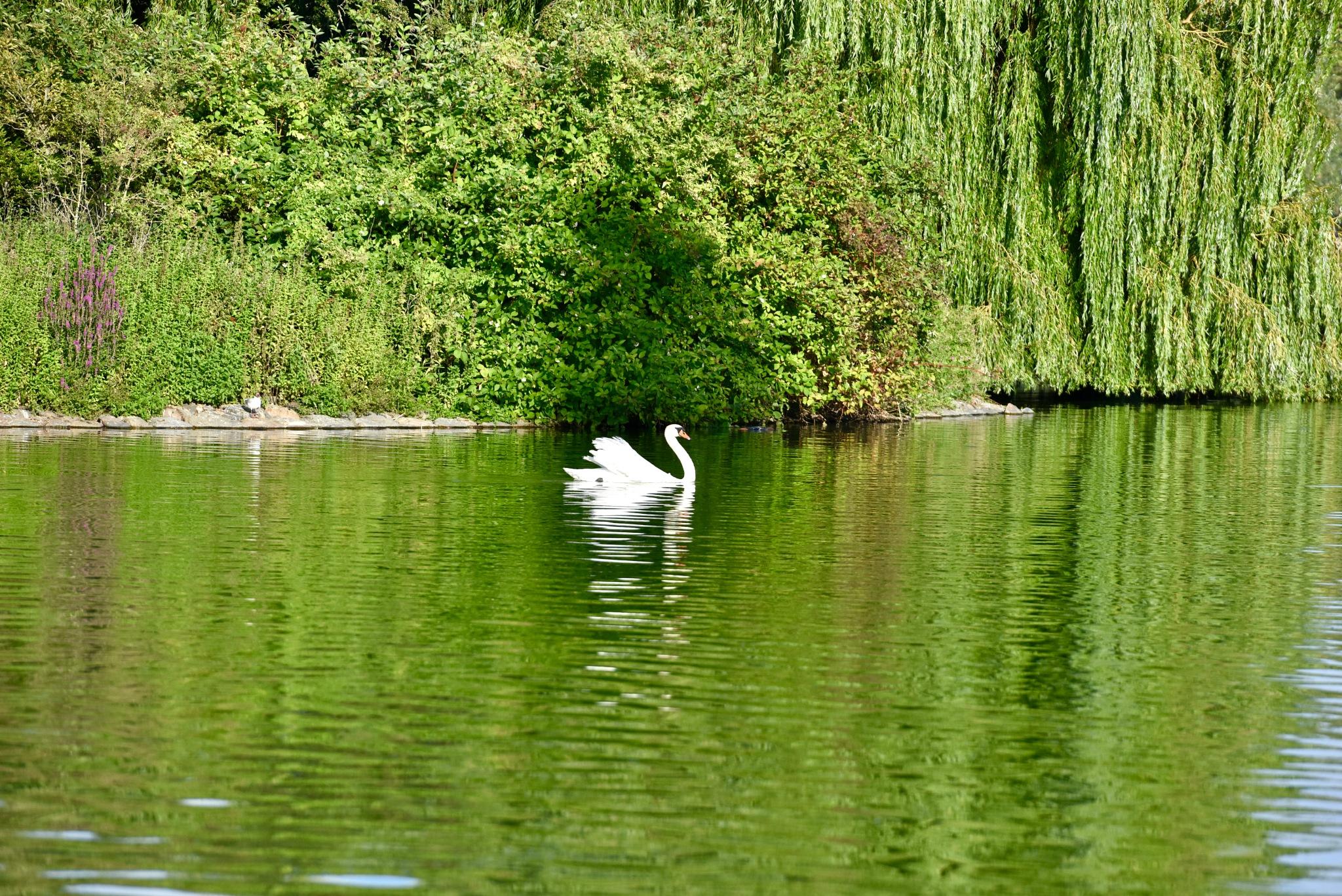 Swan 63! by Memed Bayatli
