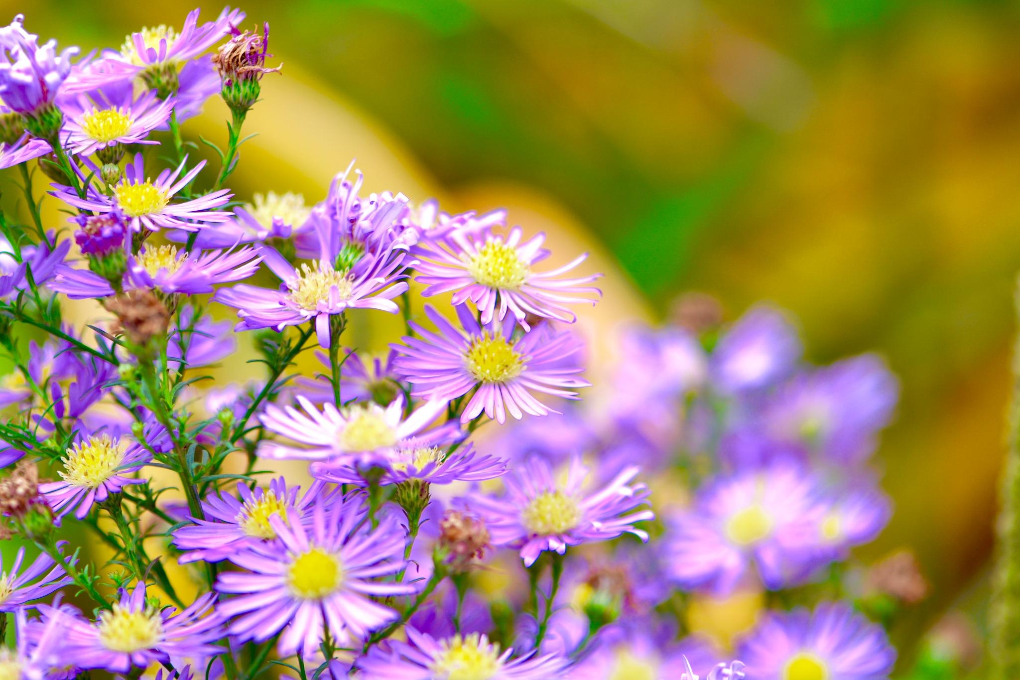 Flowers 699! by Memed Bayatli