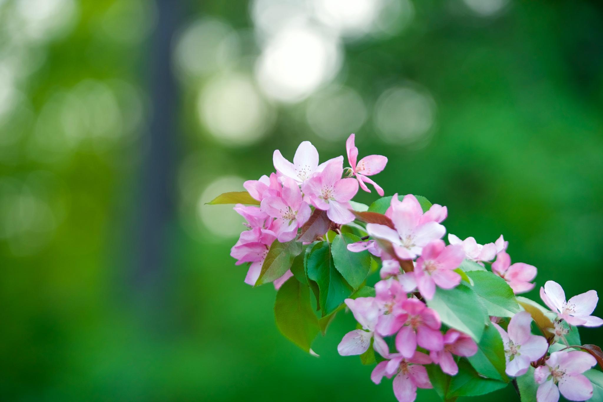 Flowers 600! by Memed Bayatli