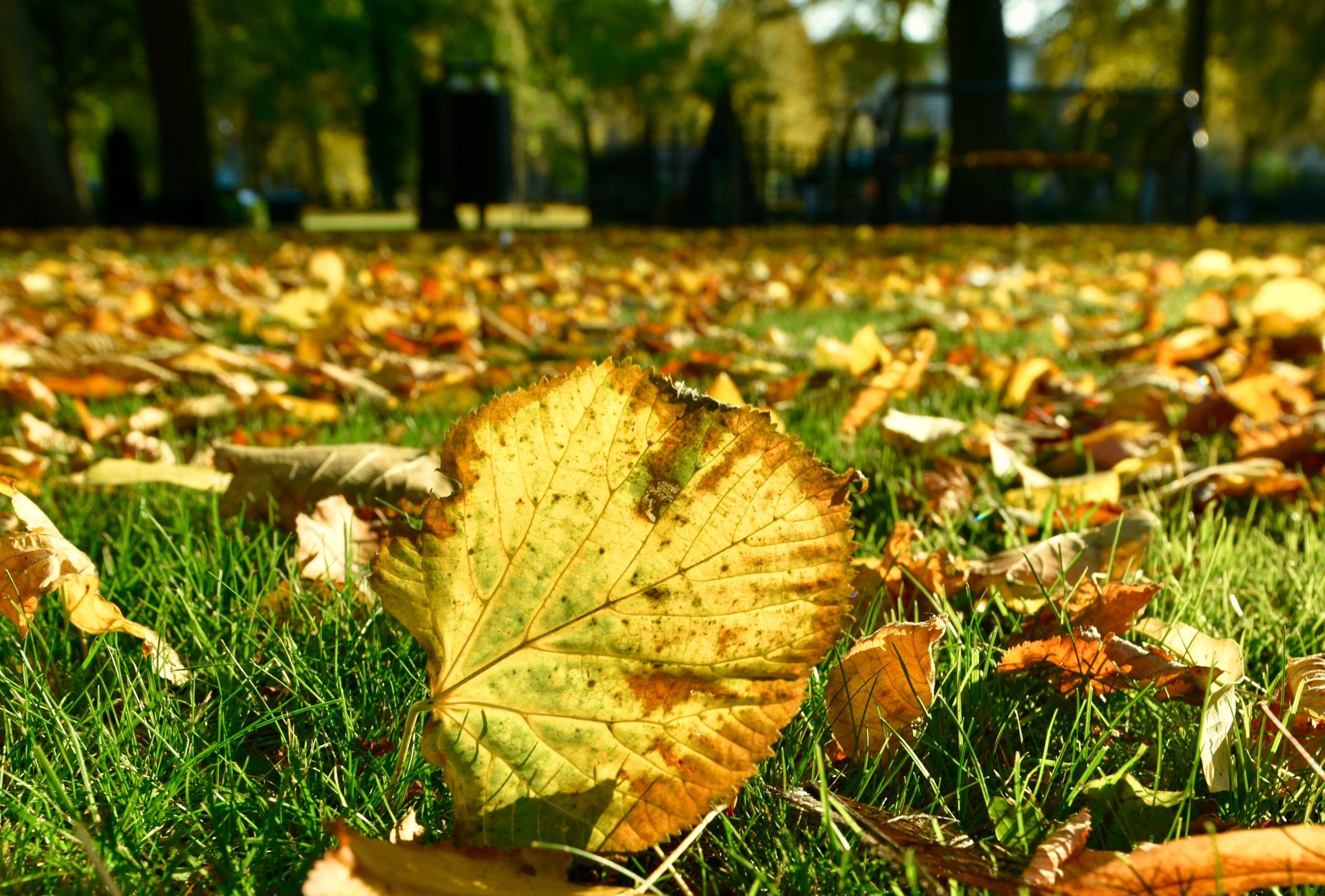 Autumn 88! by Memed Bayatli