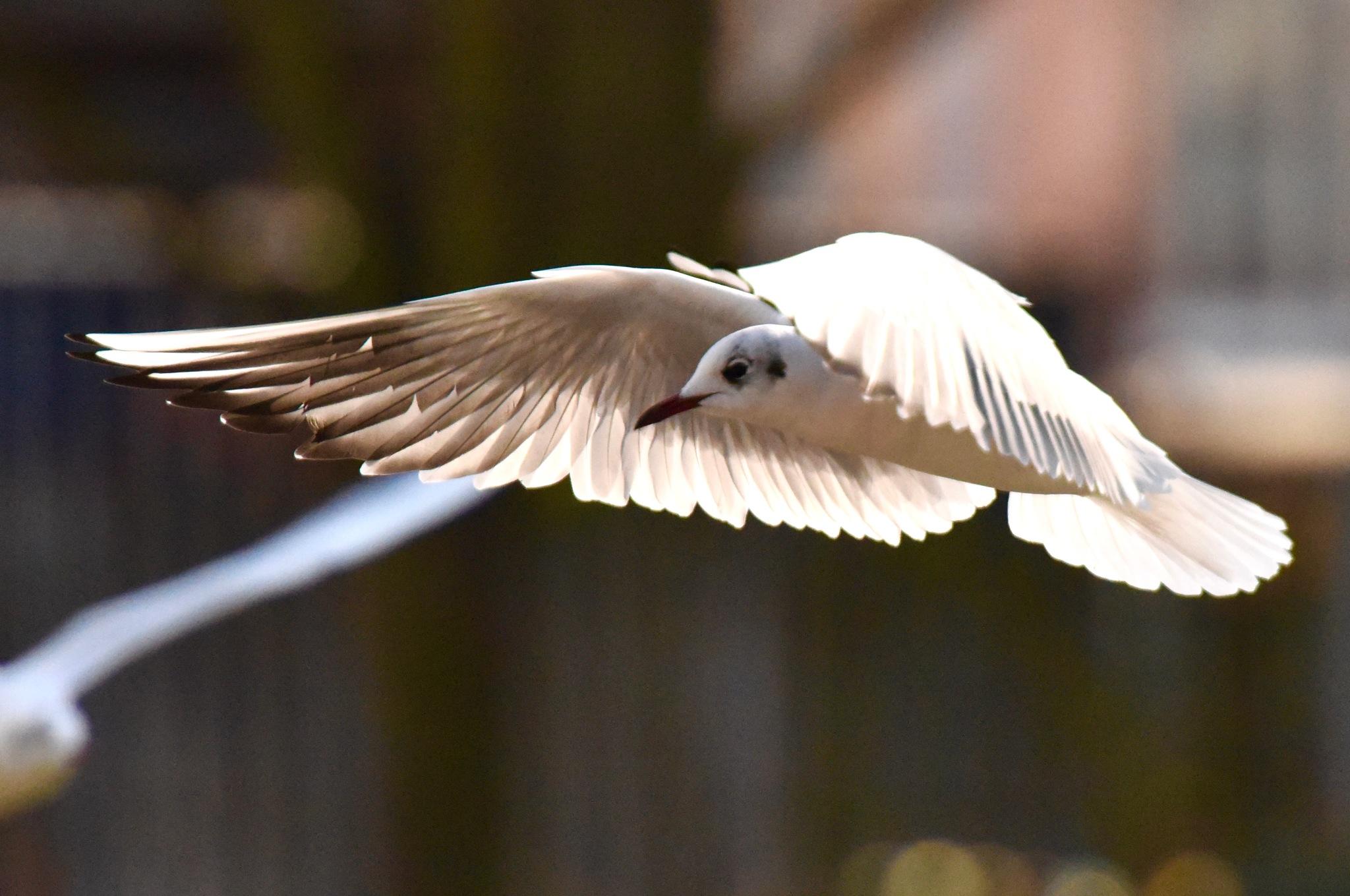 Bird 34! by Memed Bayatli