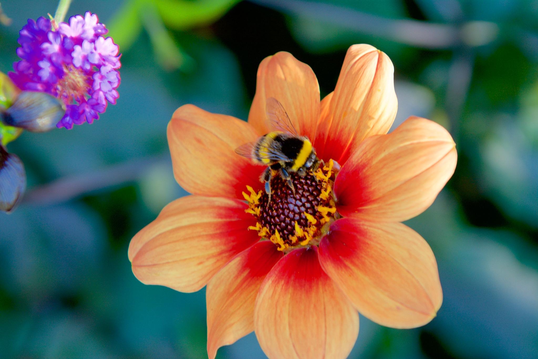 Big Bee ! by Memed Bayatli