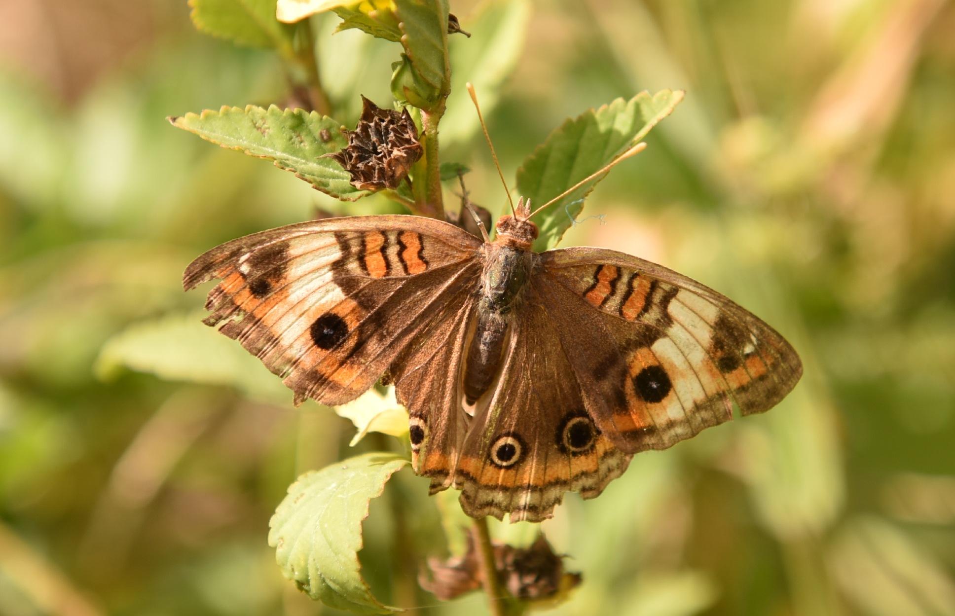 Butterfly 51! by Memed Bayatli