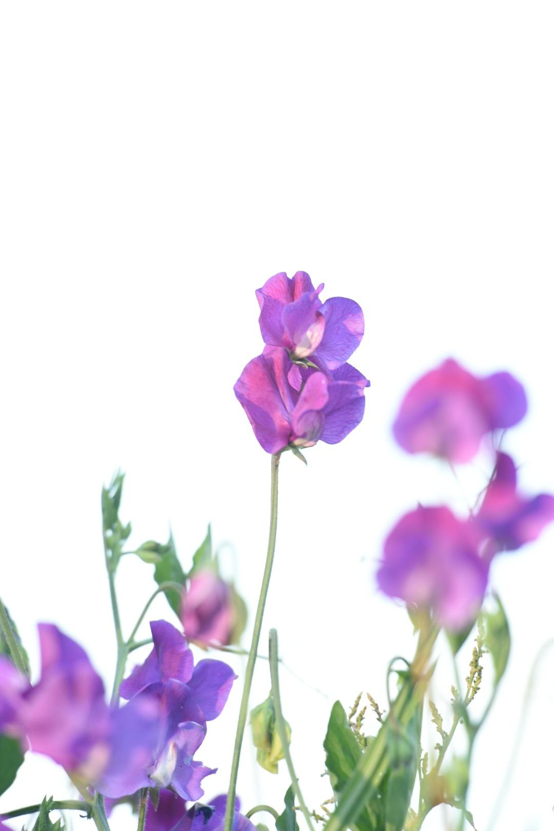 Flowers 331! by Memed Bayatli