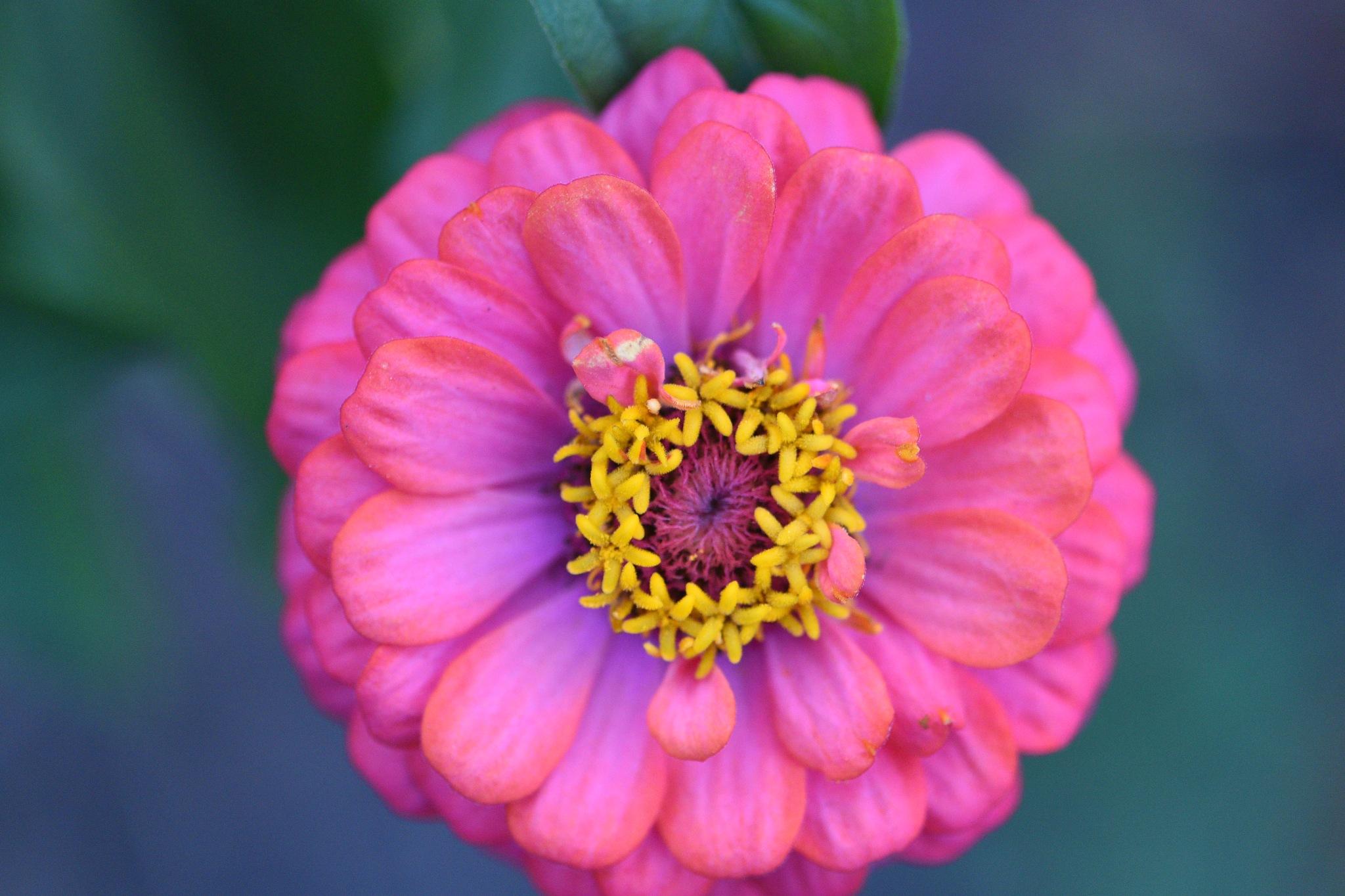 Flowers 411! by Memed Bayatli