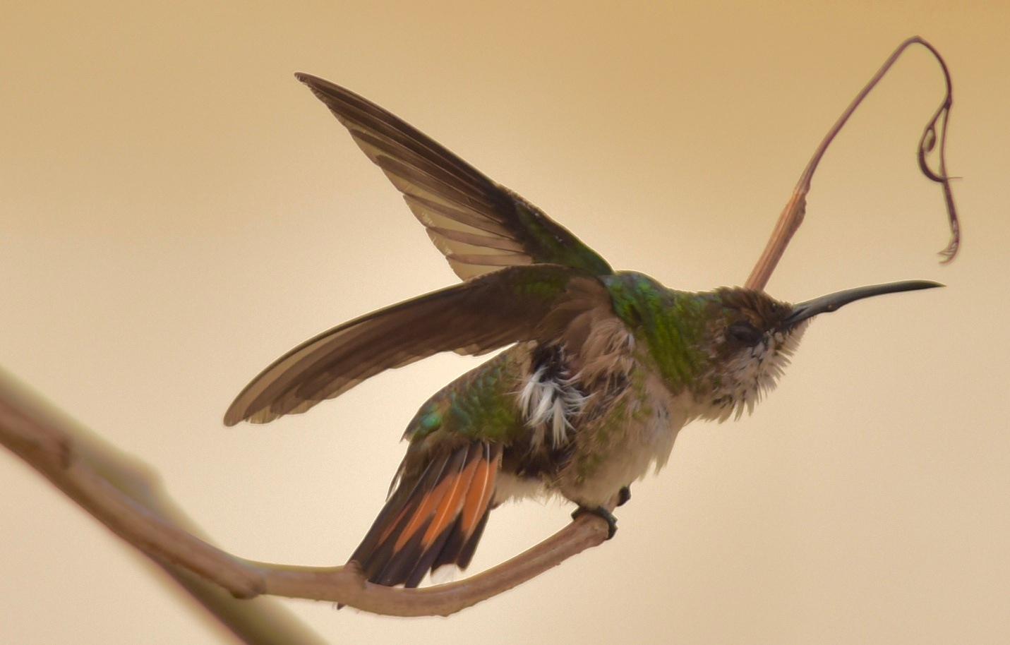 Bird 841! by Memed Bayatli